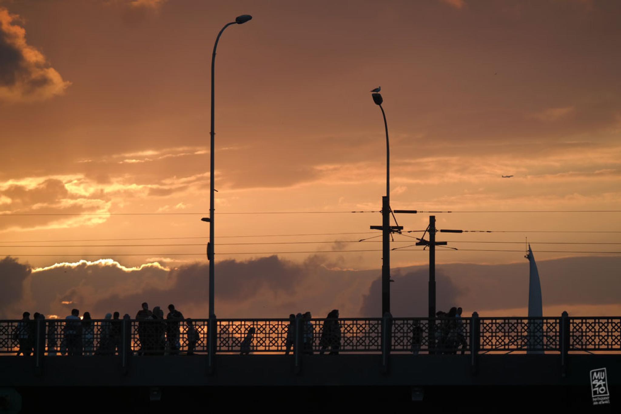 Bridge by Musato