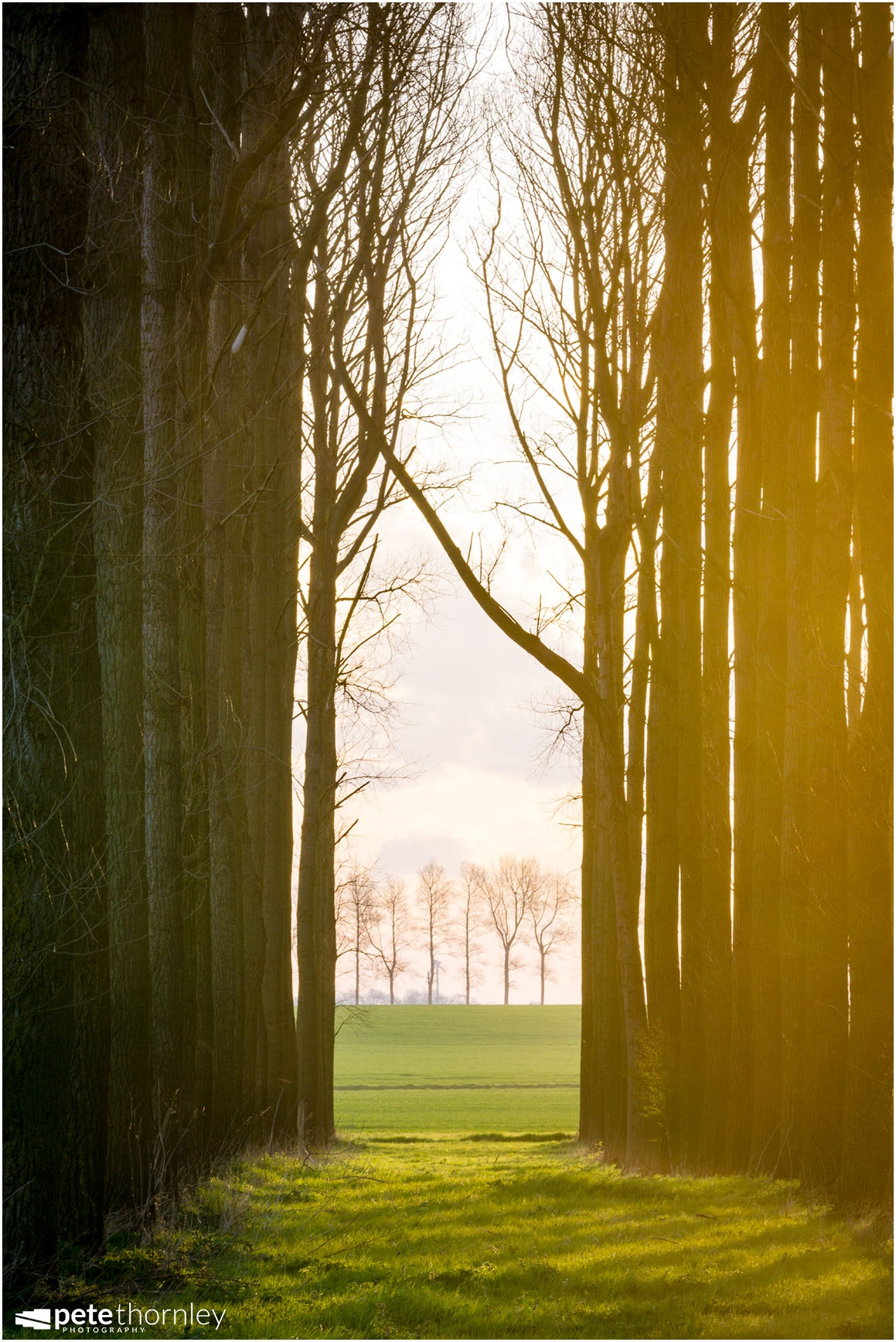 Trees and light  by Pete Thornley