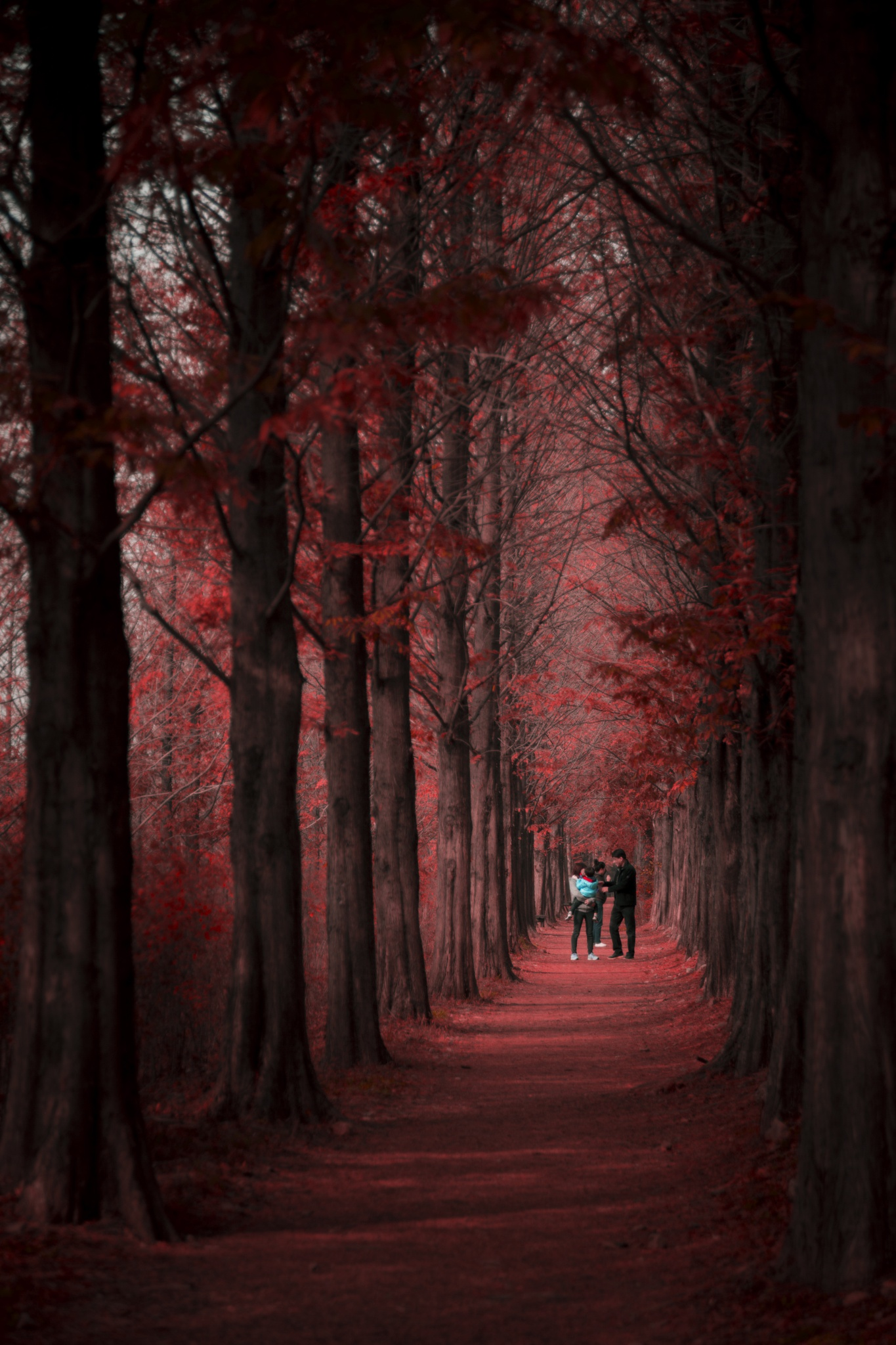 Forest in autumn by Hyeong Rok AN