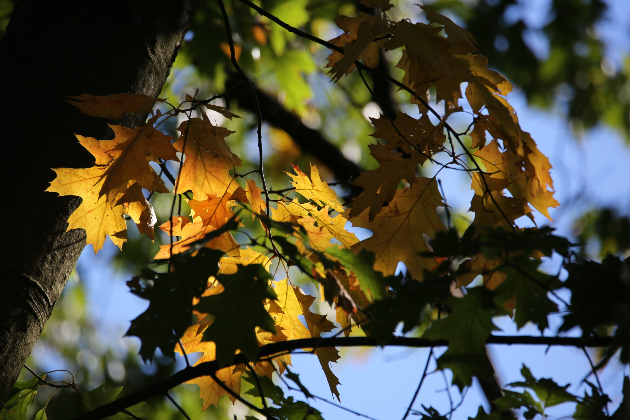 Leaves by HorstMonatz