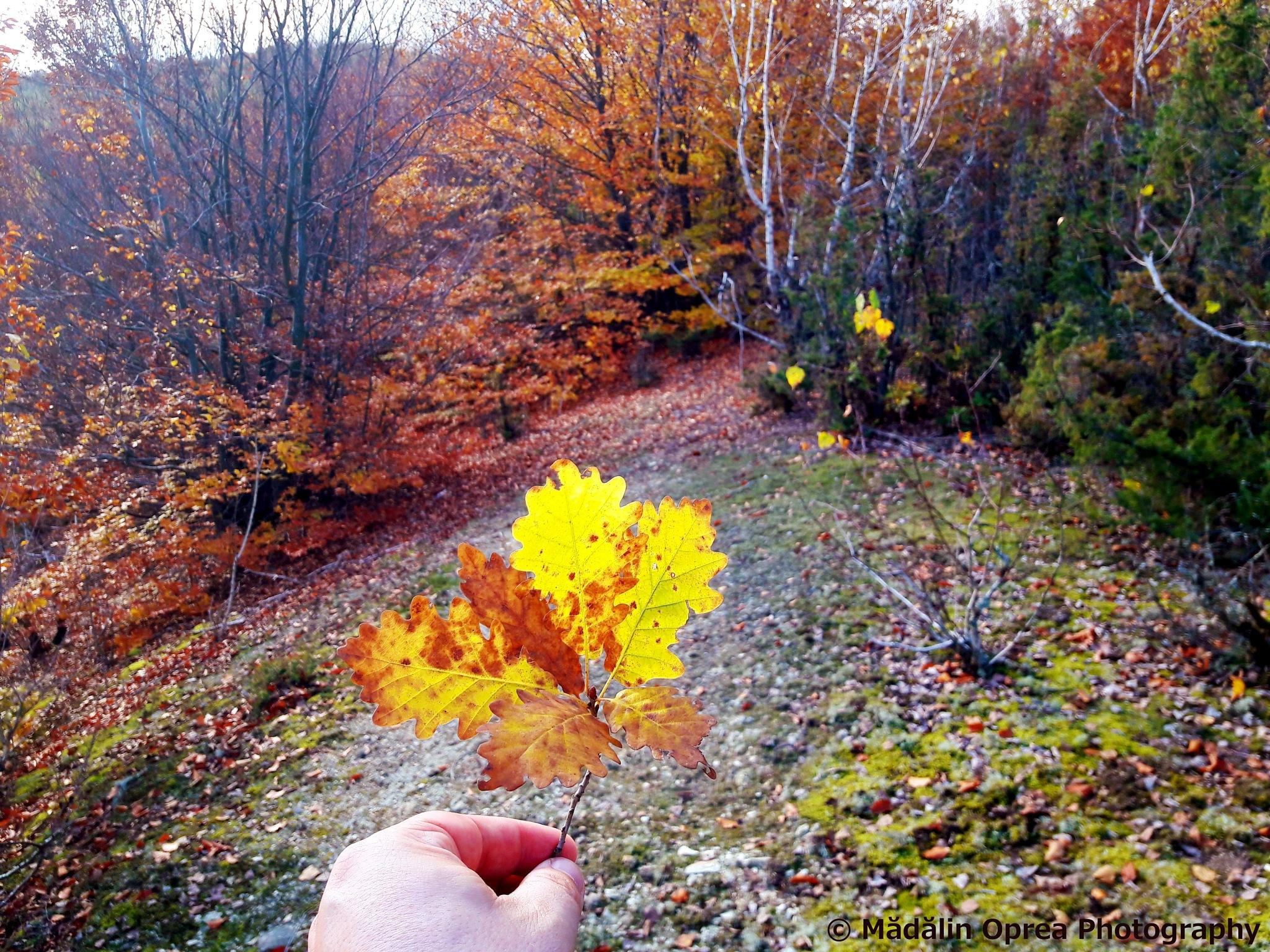 Autumn by Mădălin Oprea Photography