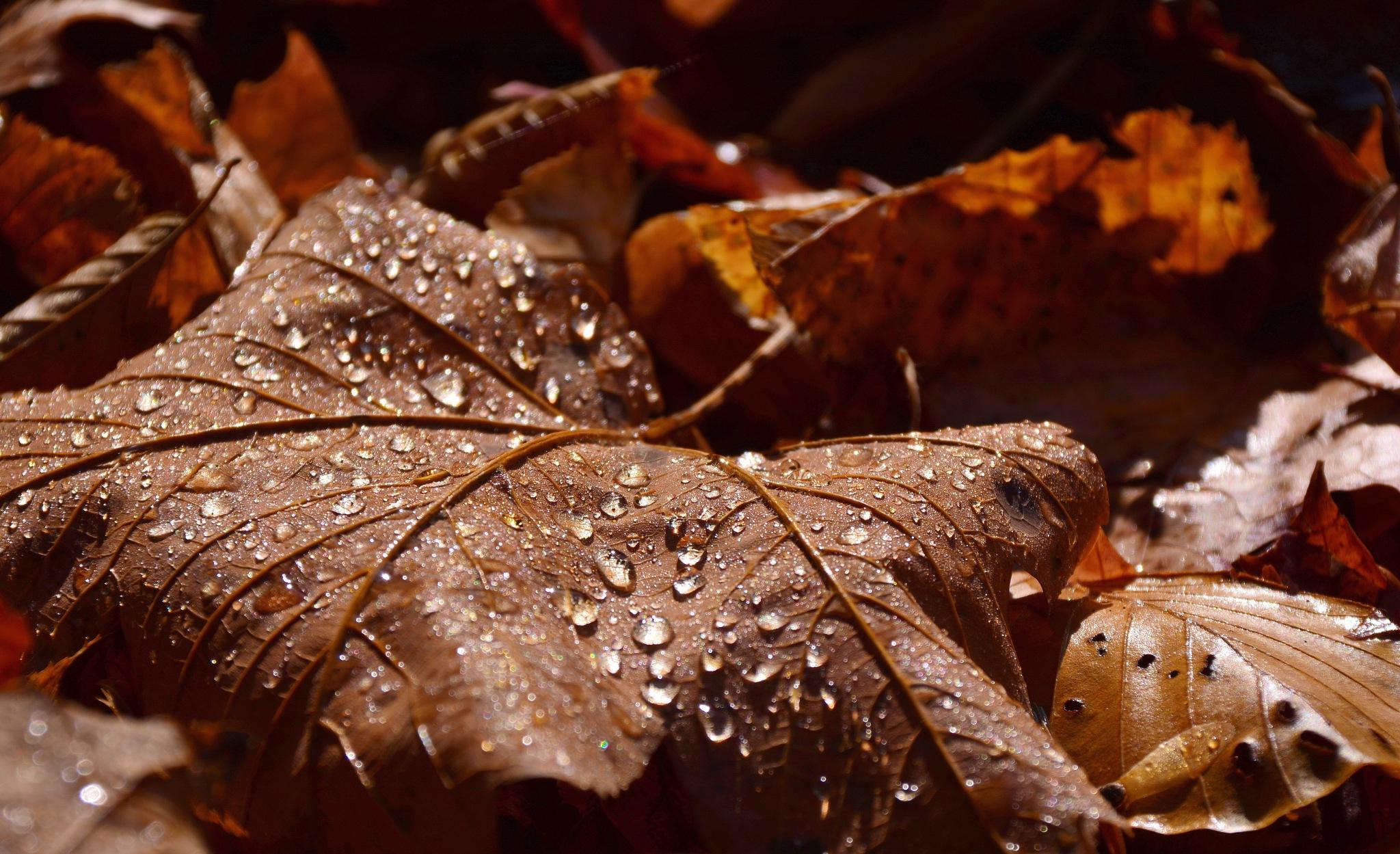 Autumn drops by maradesign