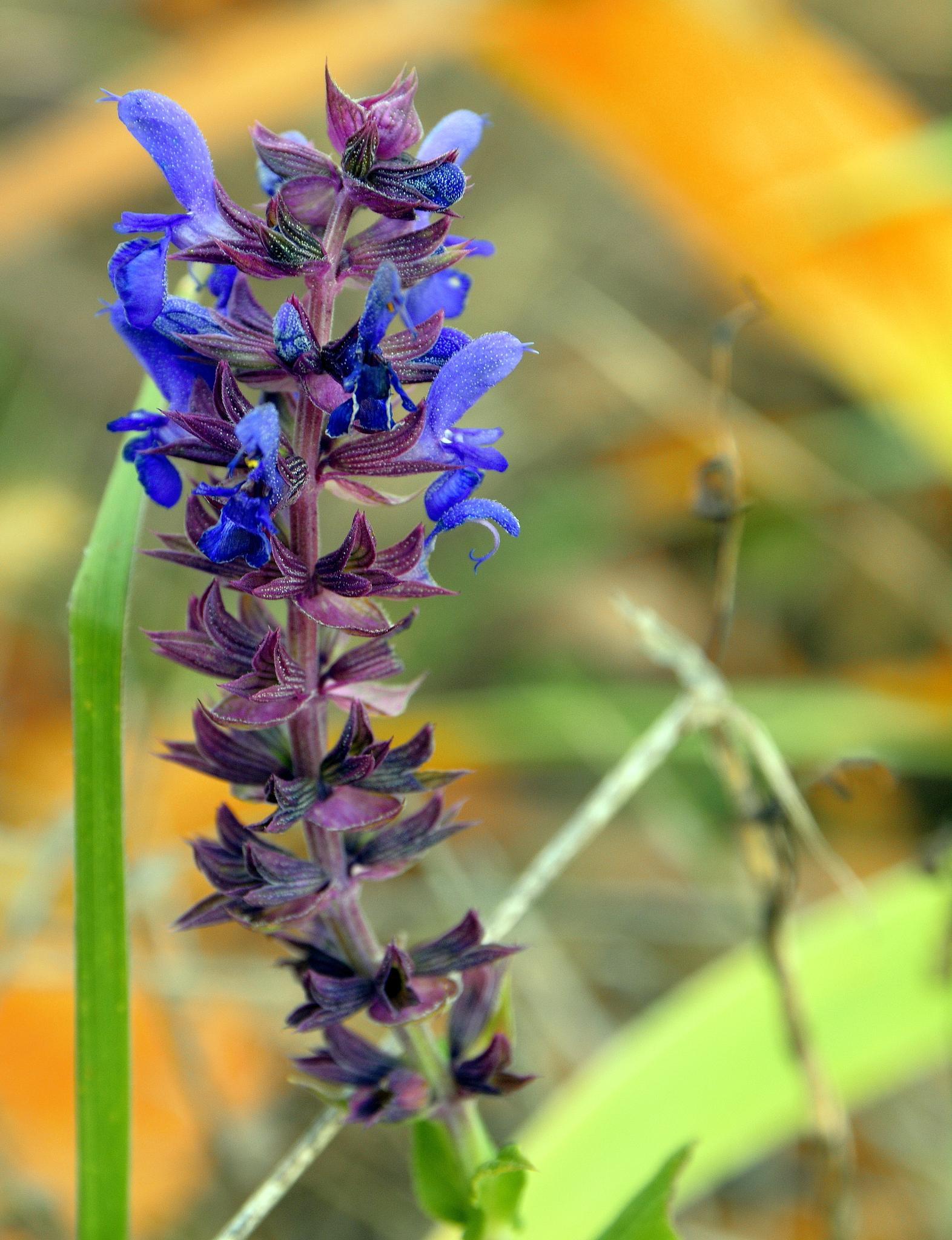 Purple flower by maradesign