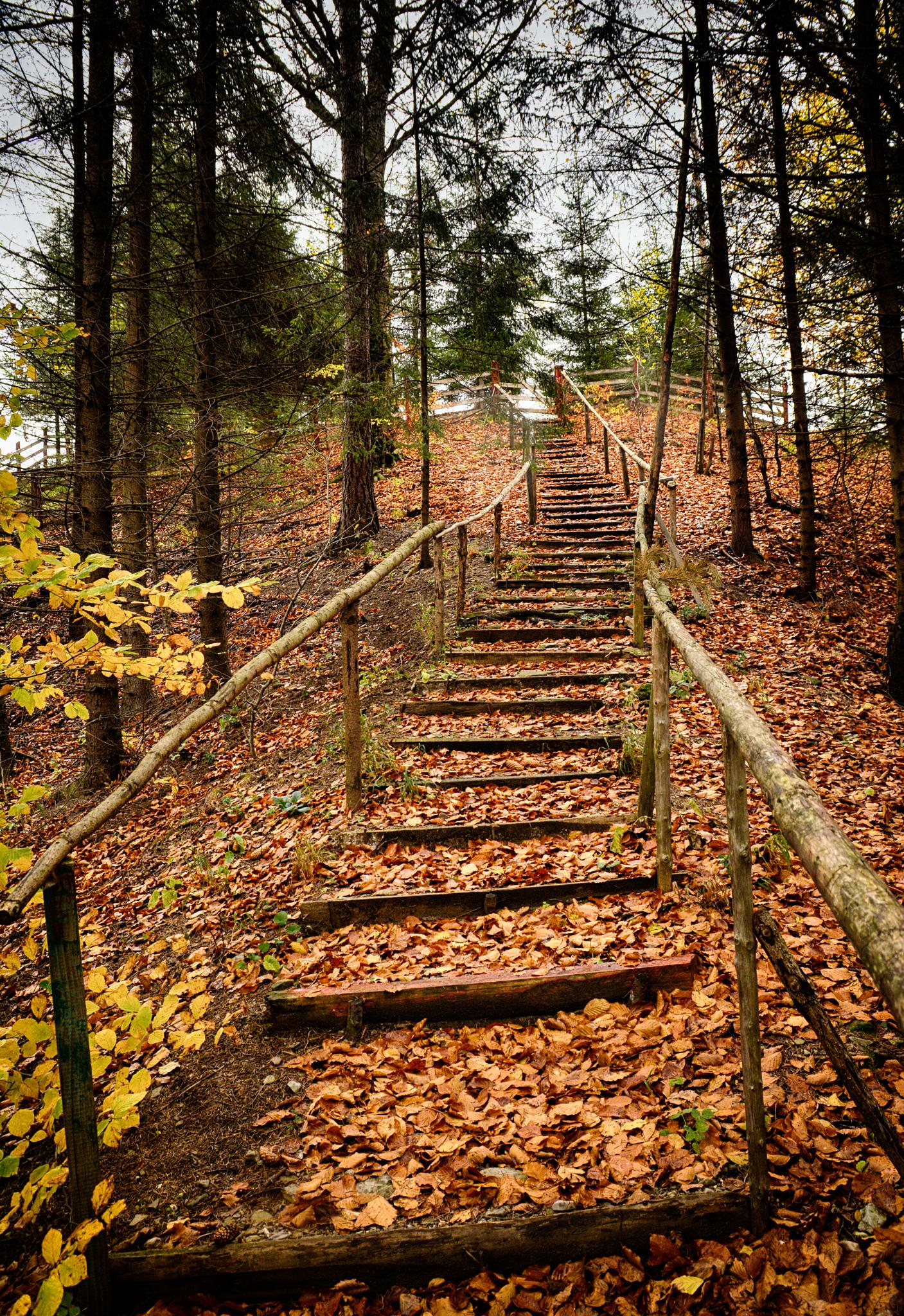 Autumn stairs by maradesign