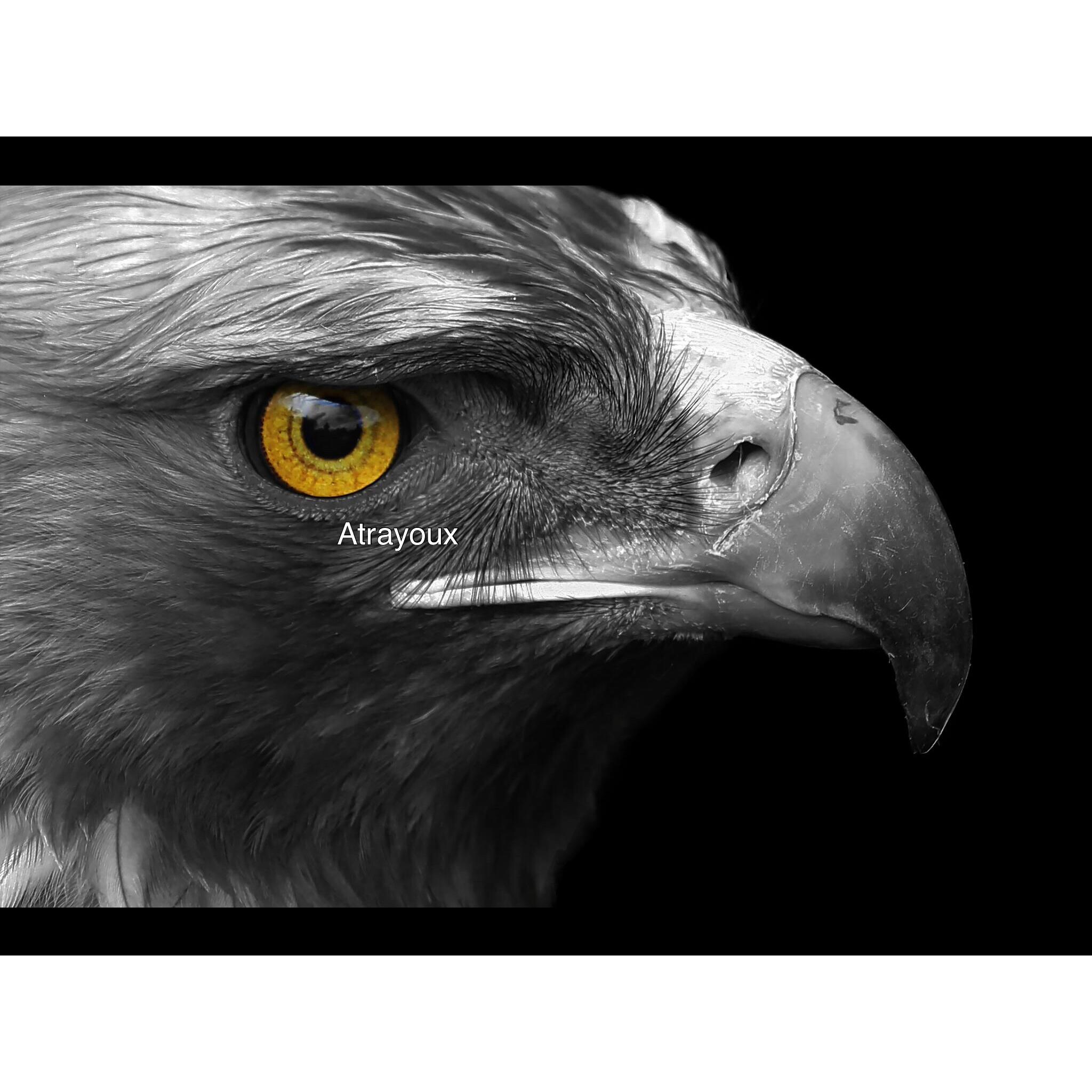 Golden eyes by Atrayoux
