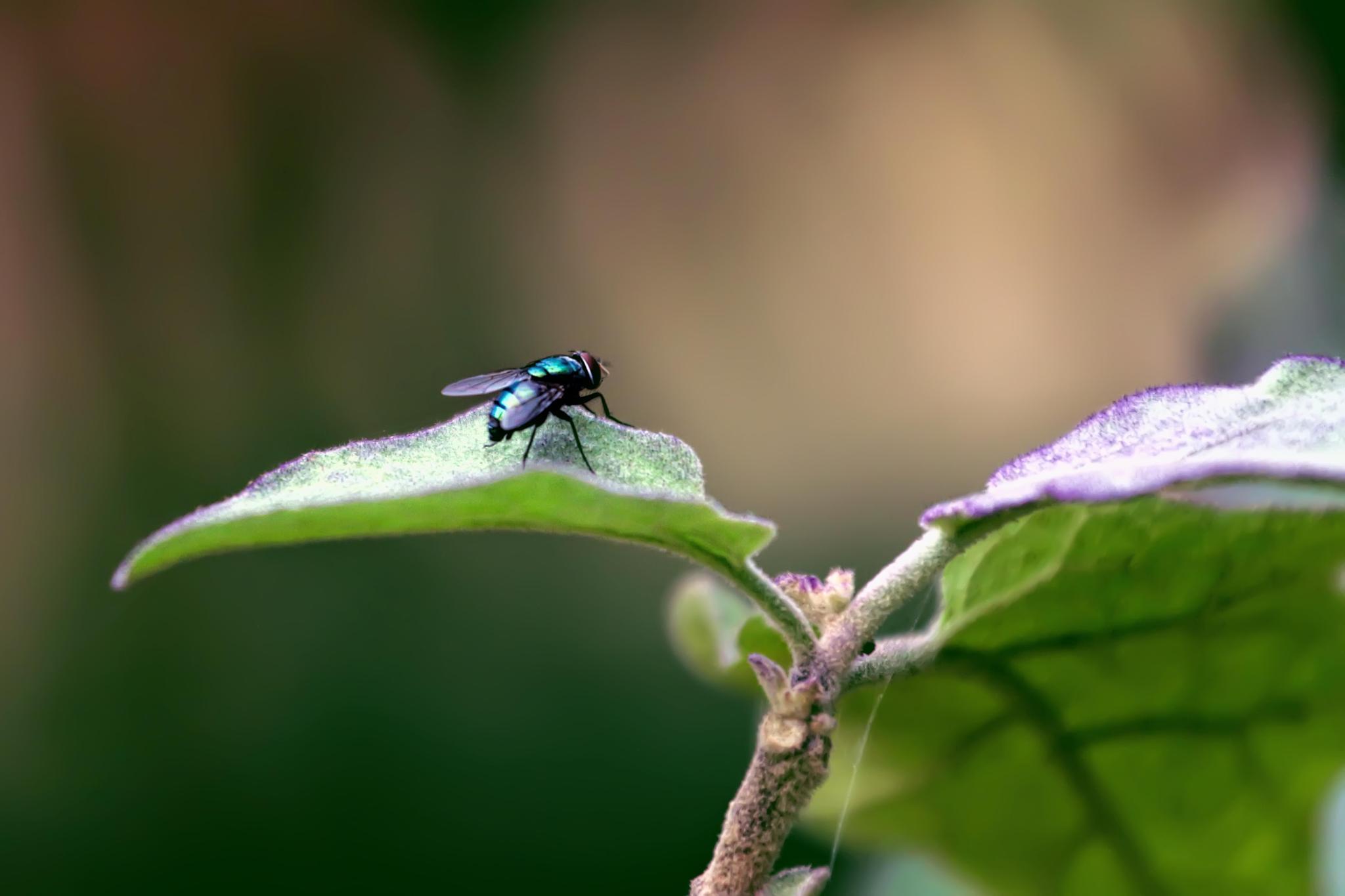 fly by Prince Tamim
