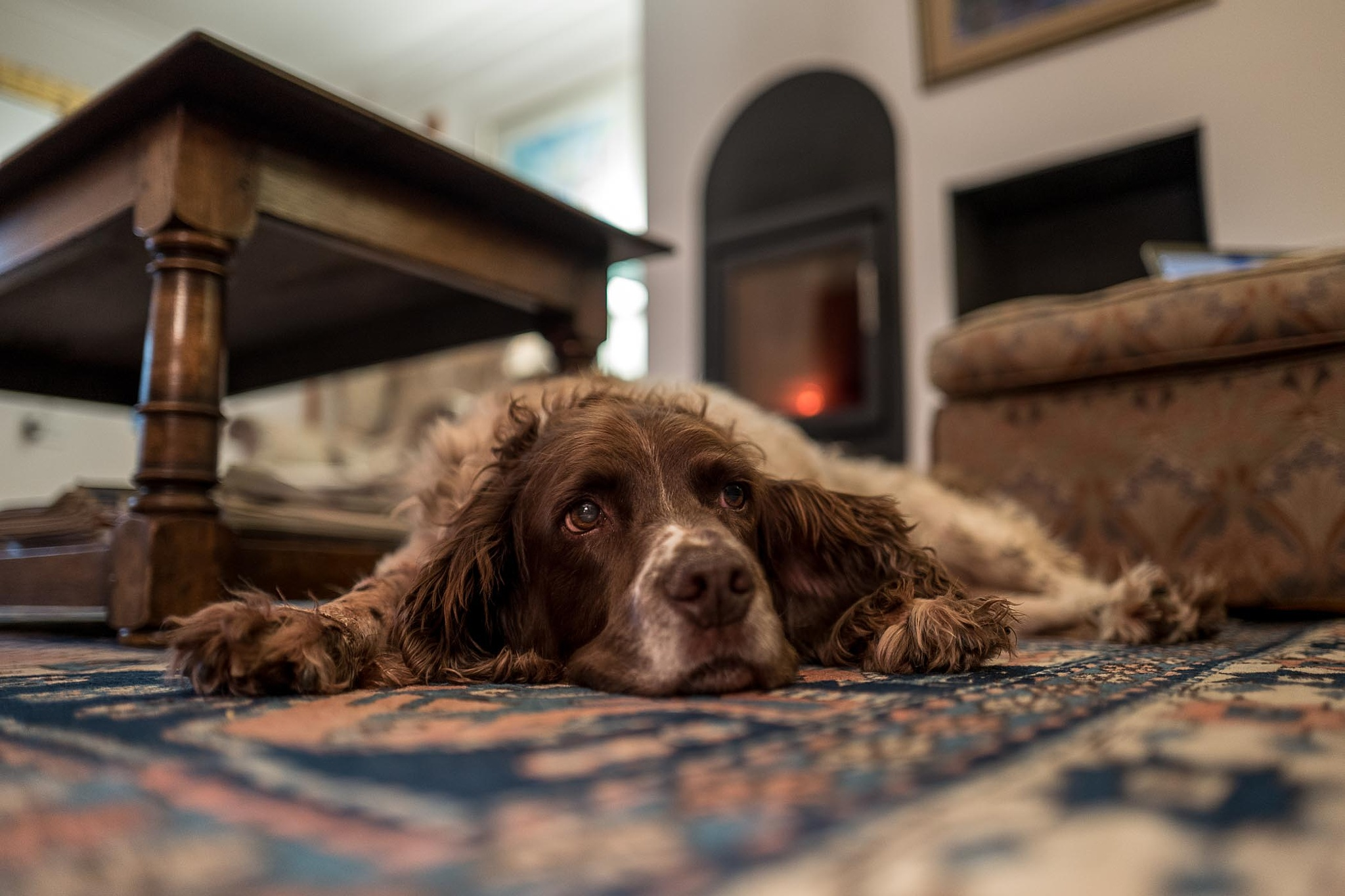 Woody by the Log Fire by mike hughes