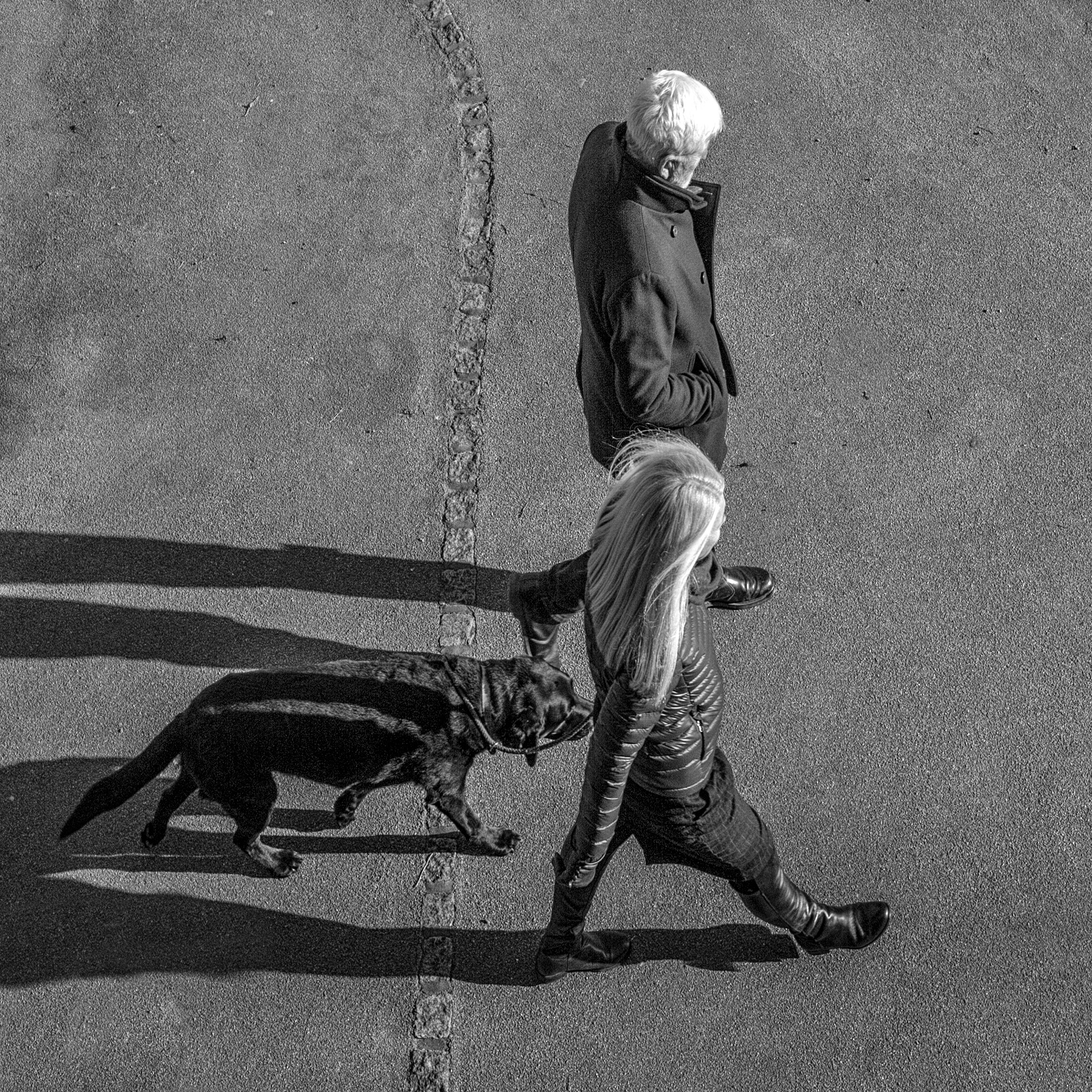 City Dog Walkers by mike hughes