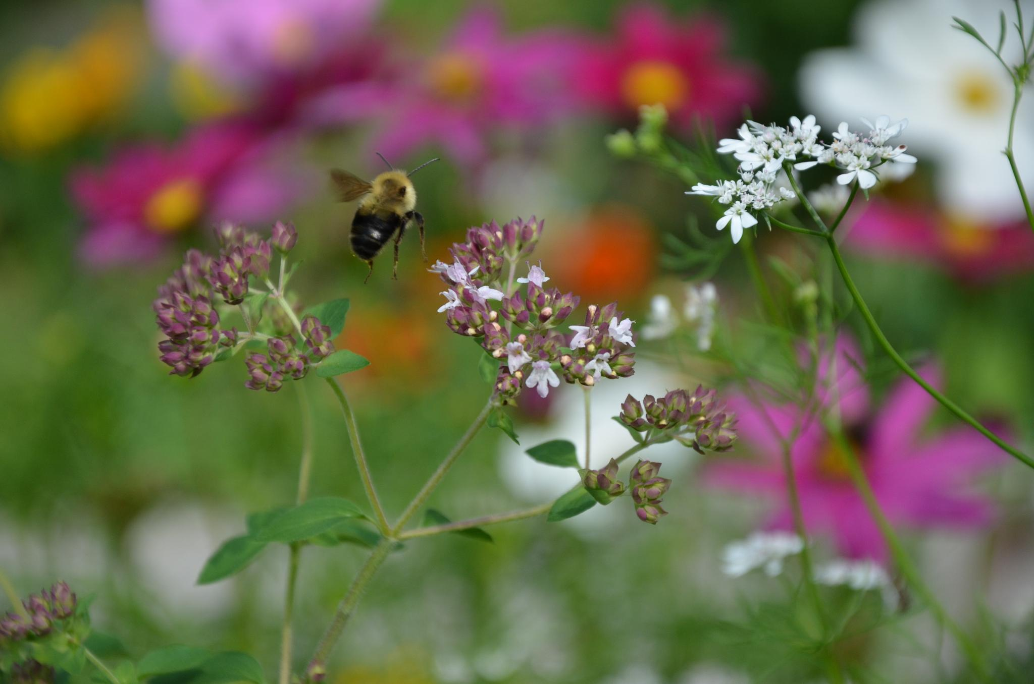 Photo in Random #pollinators #summer #garden