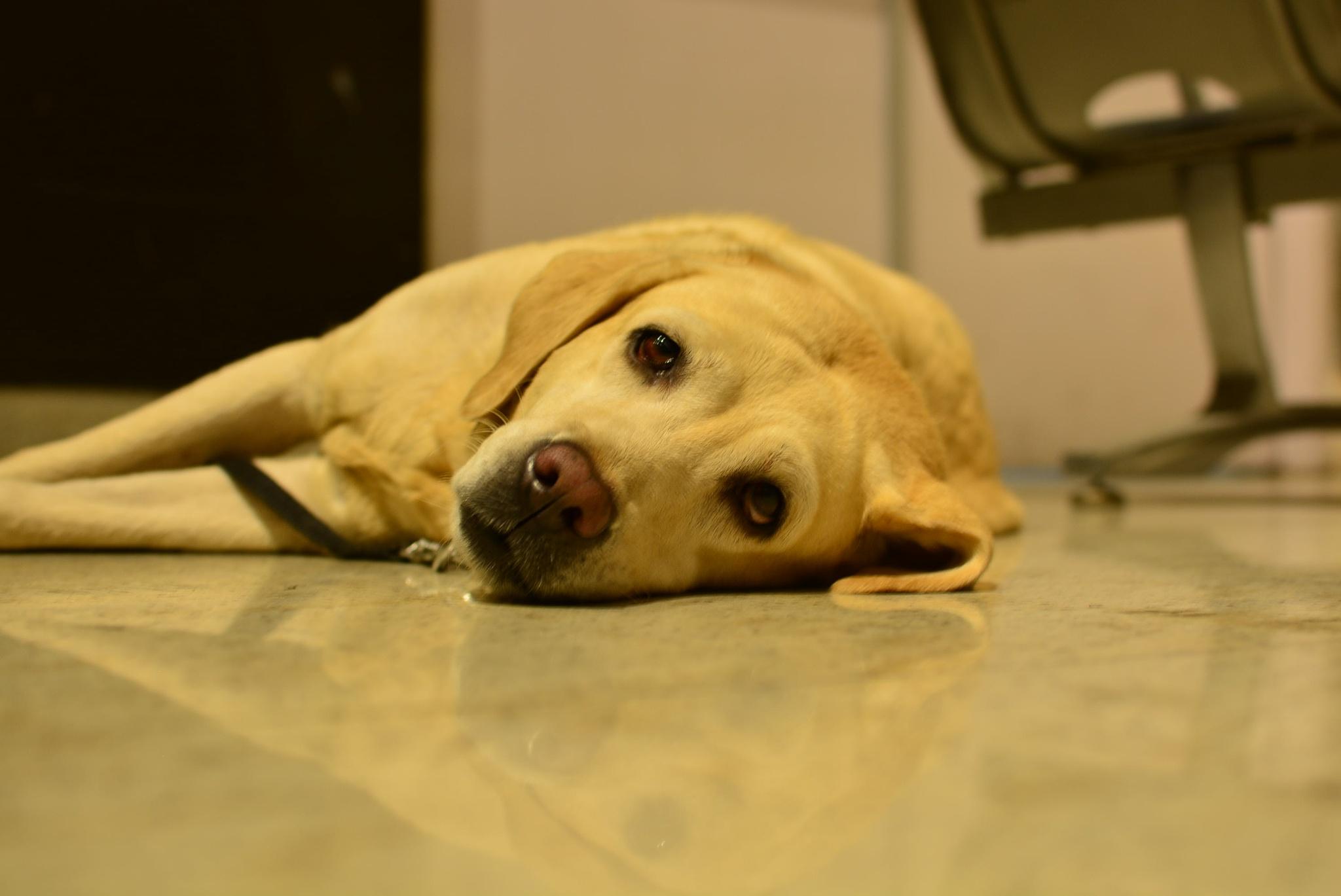 Meet Ruby by Tilya Fernandes