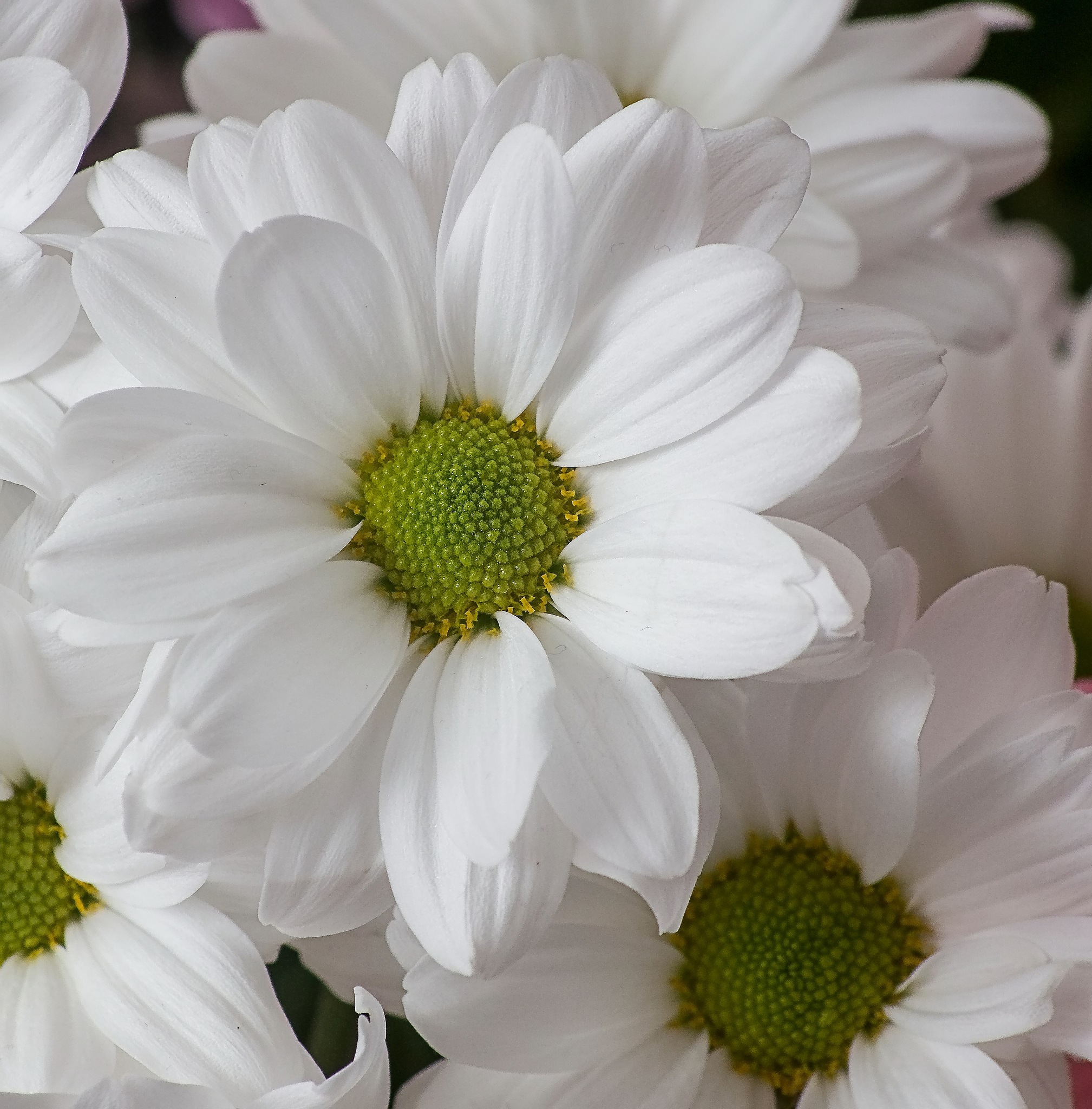 A close-up shot. by sidoneill1