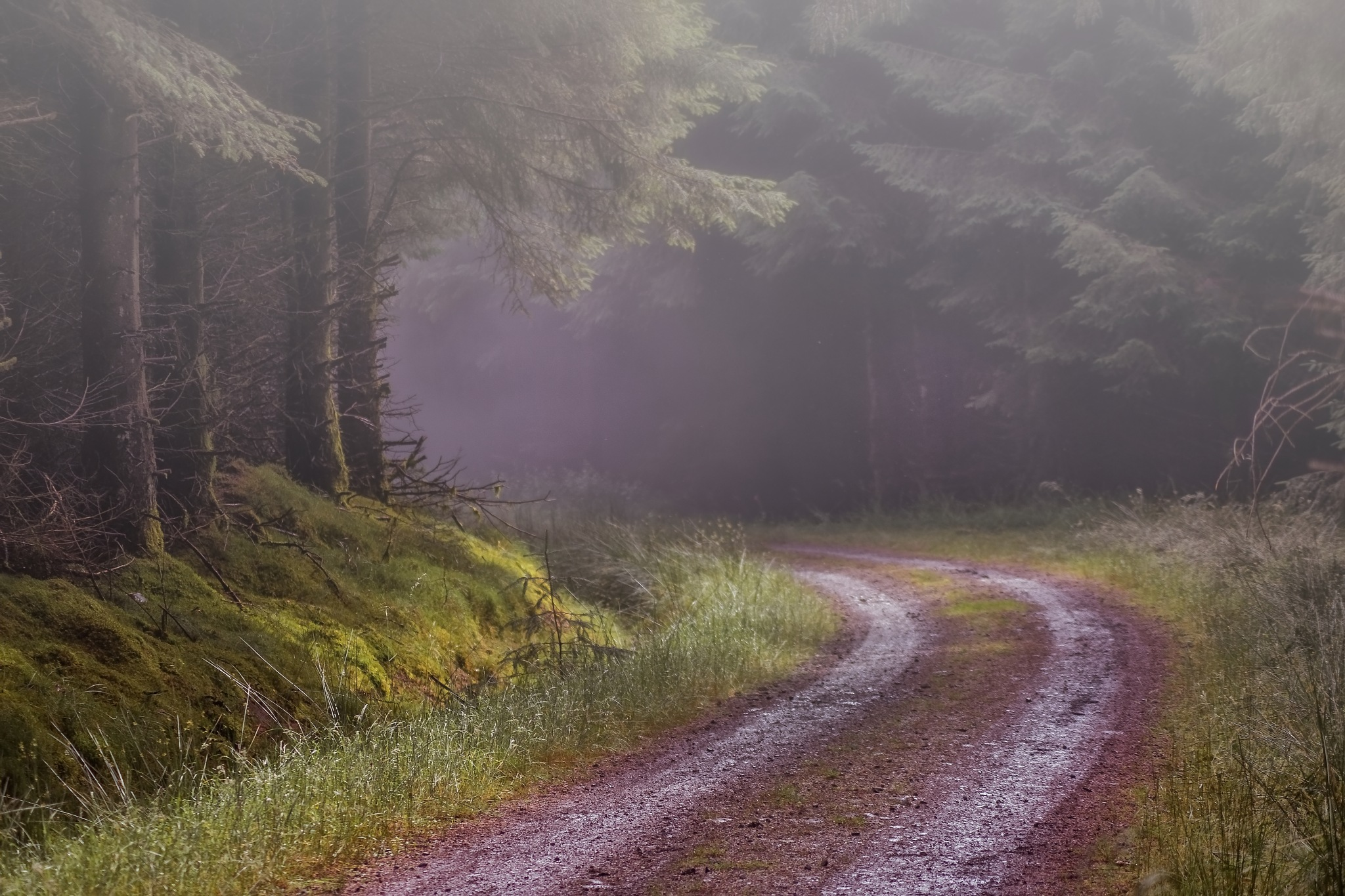 Fog in the forest. by sidoneill1