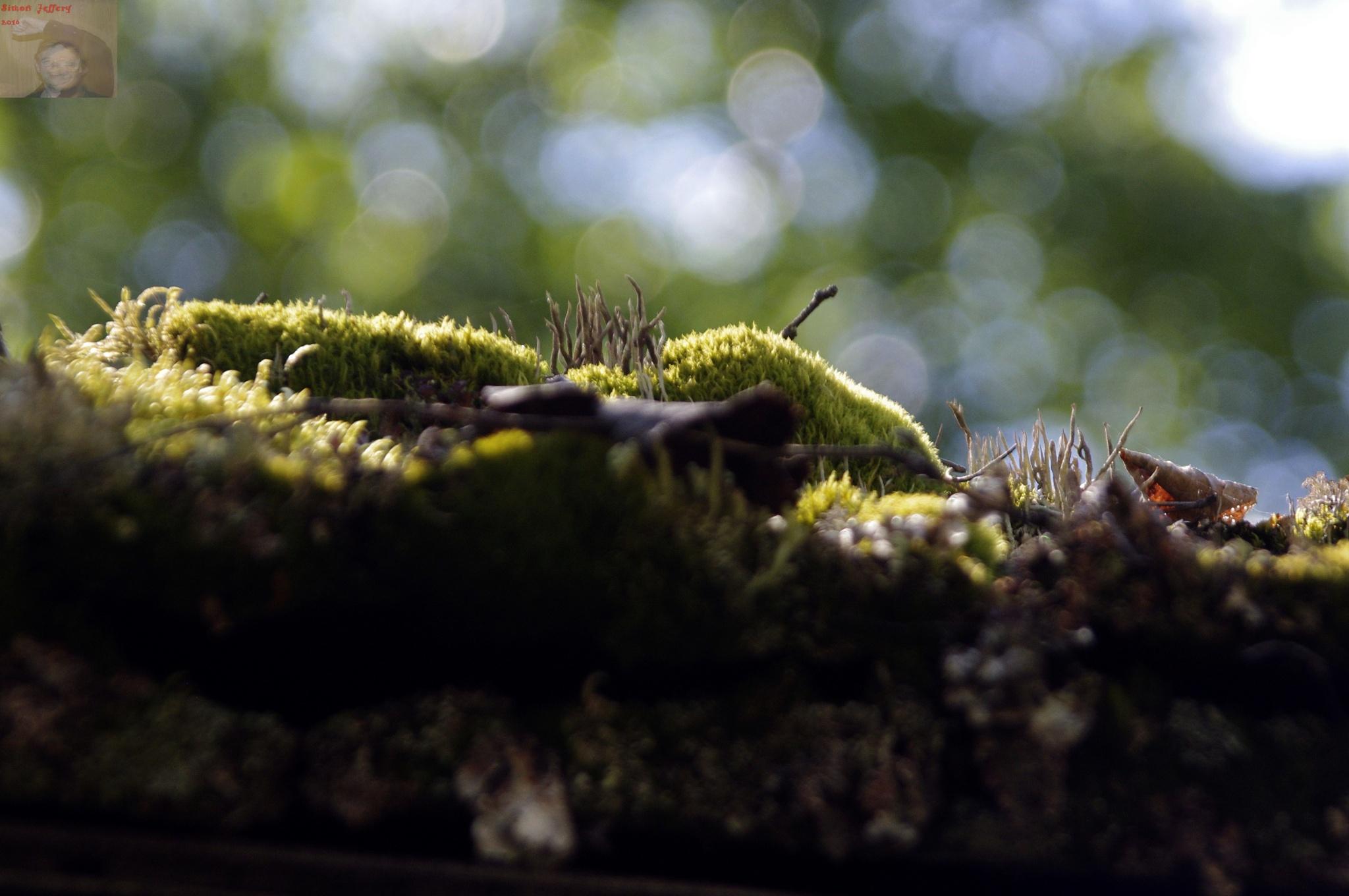 Moss on a roof by Simon Jeffery
