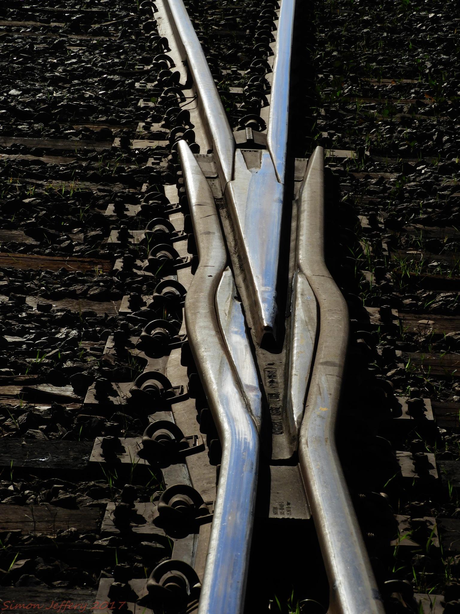 Rail Frog by Simon Jeffery