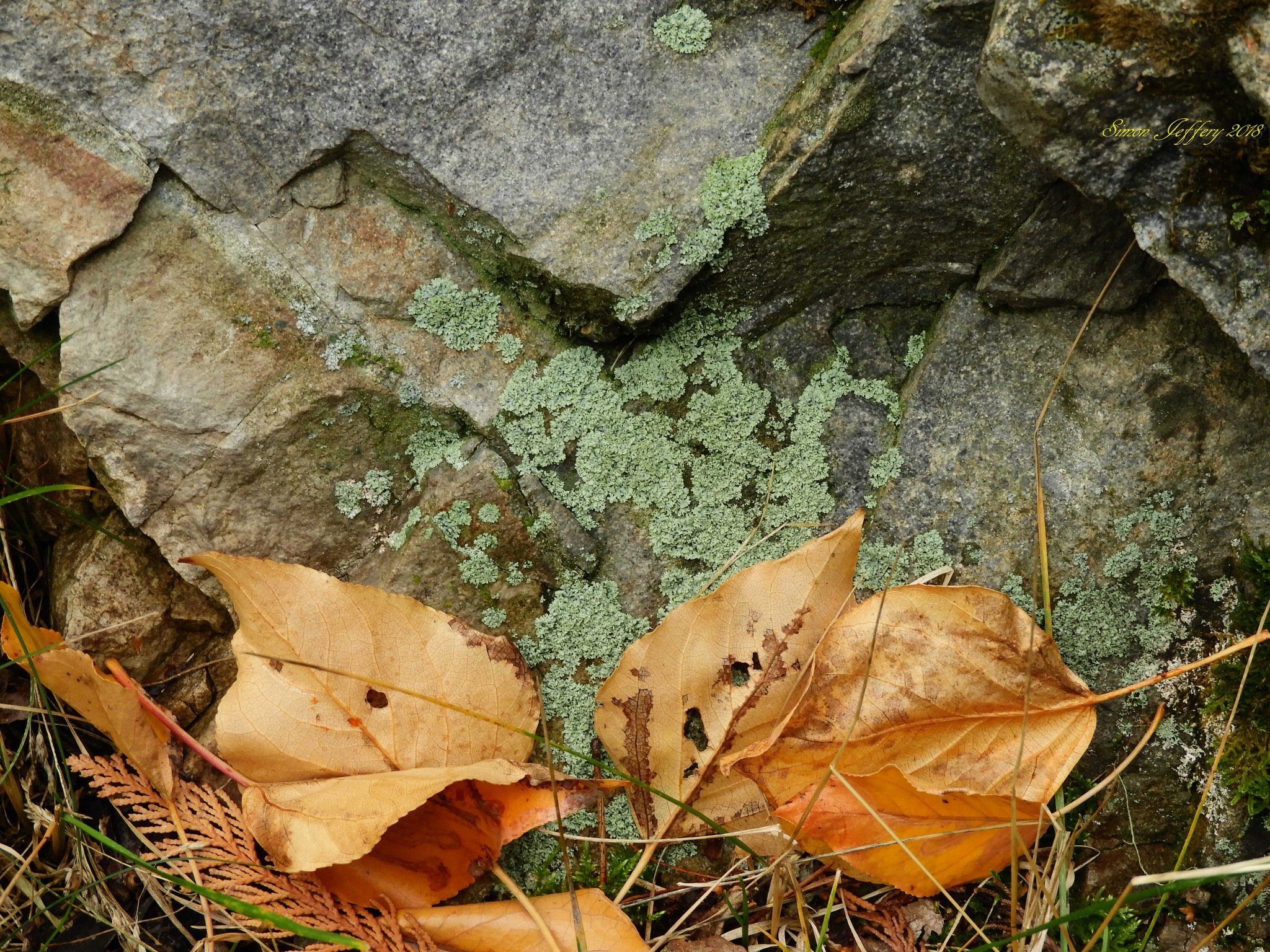 Leaves and lichen by Simon Jeffery