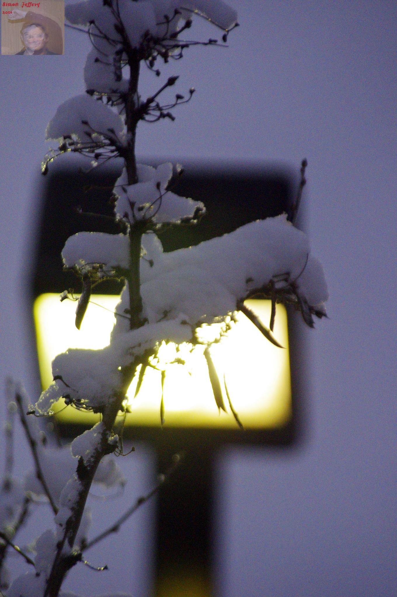 Back lit plant by Simon Jeffery