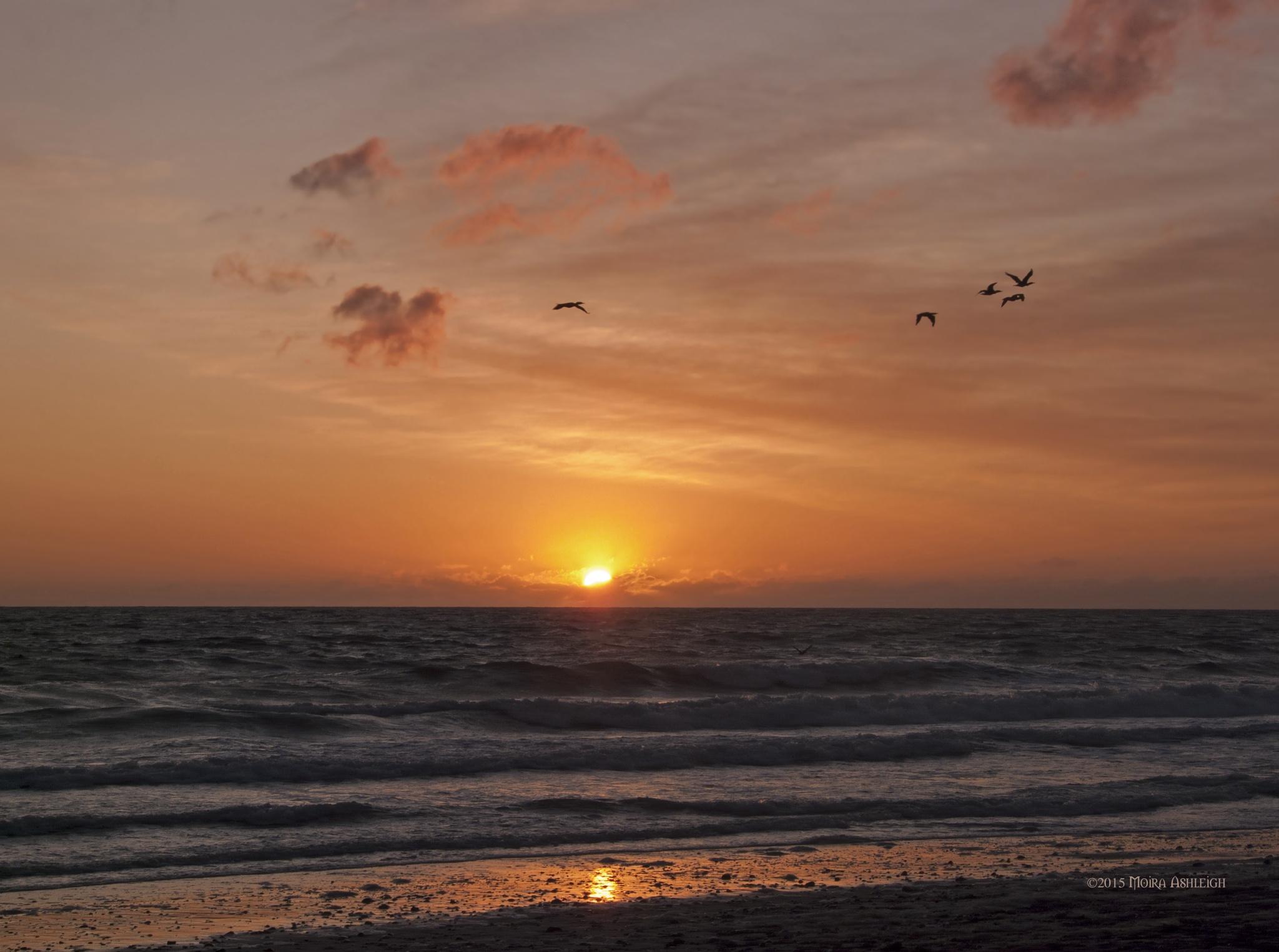 Sunrise for Five Cormorants by Moira Ashleigh