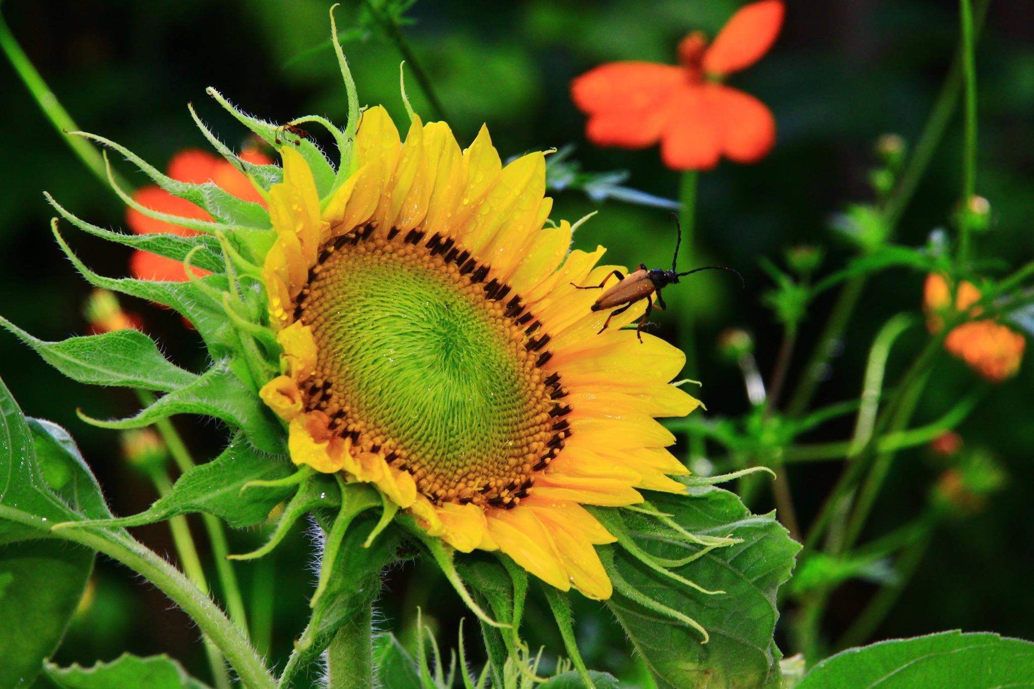 little summer sun by stalker034