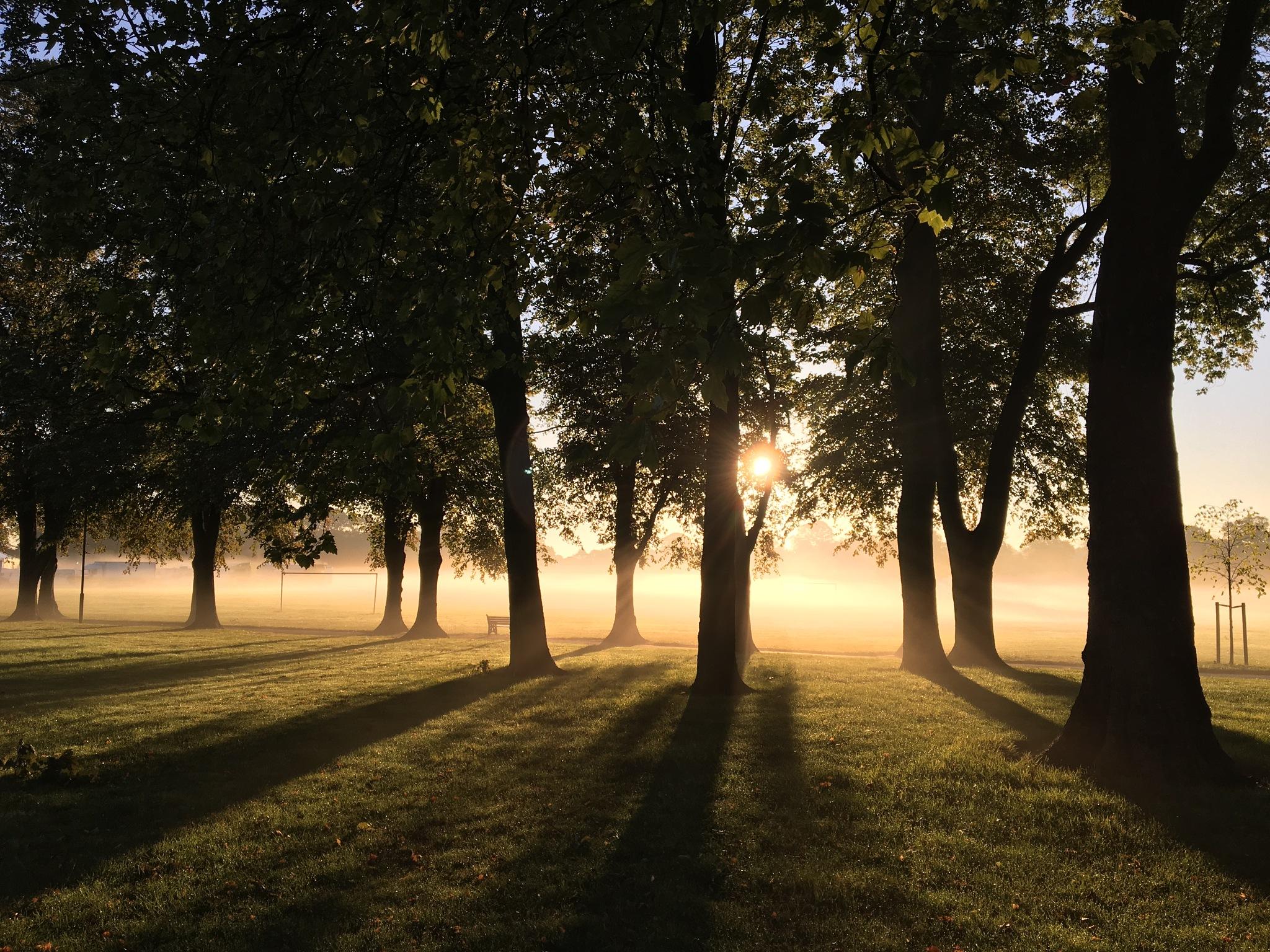 Misty morn by Michavich