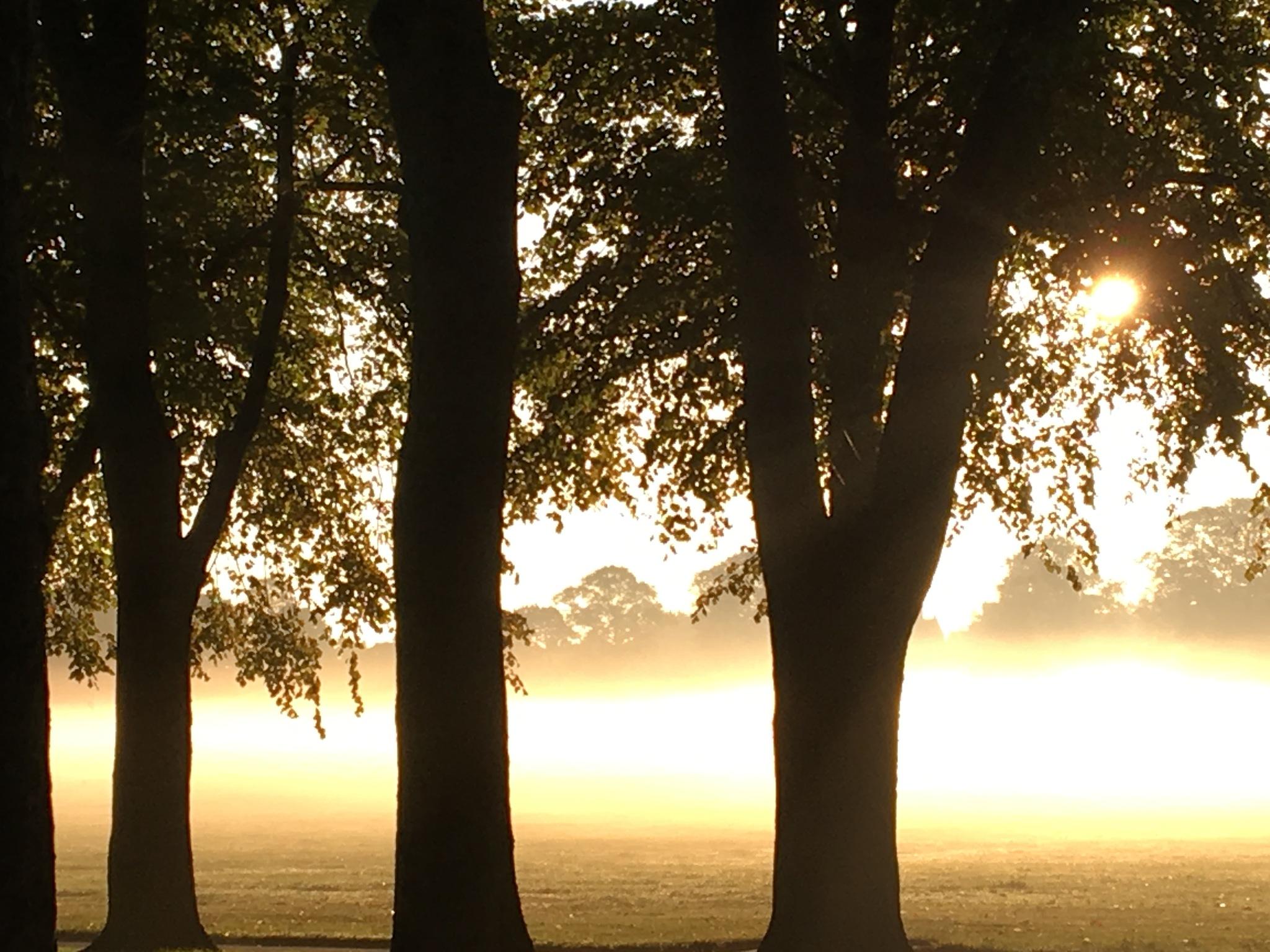 Misty morn 2 by Michavich