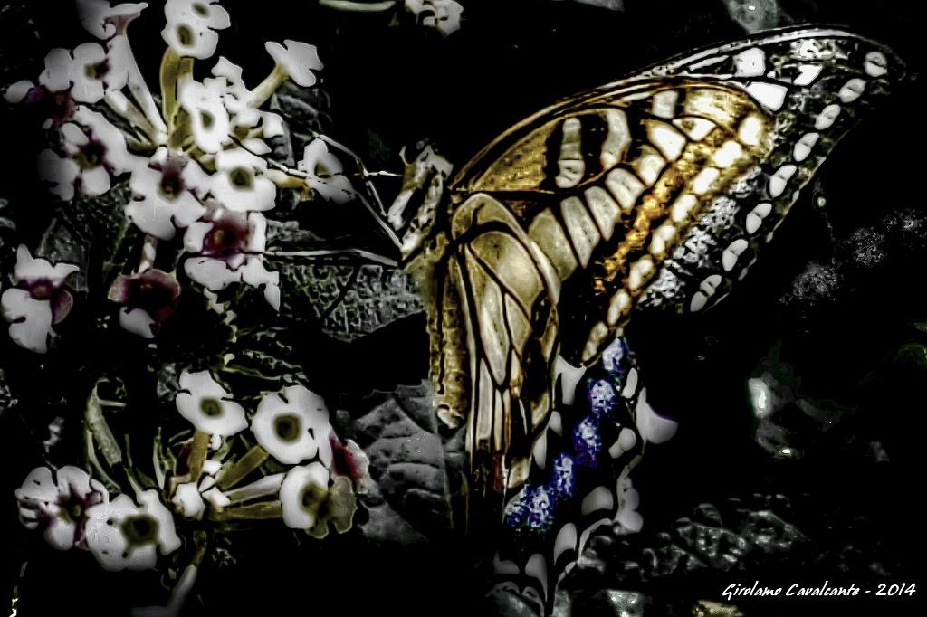 papillon by GiroPhoto - Girolamo Cavalcante