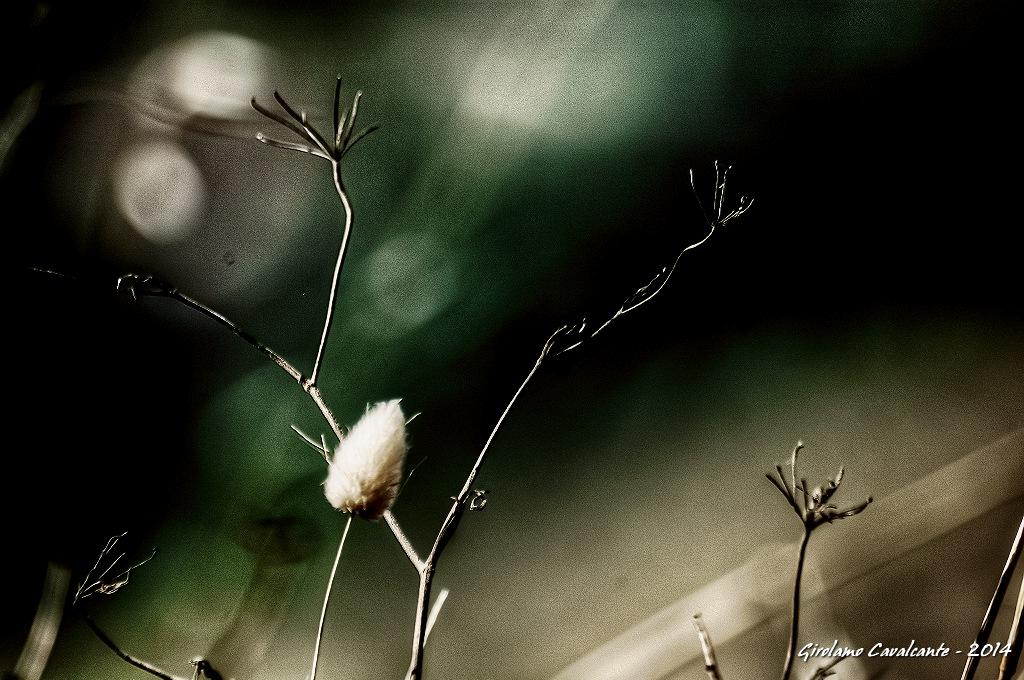 macro by GiroPhoto - Girolamo Cavalcante