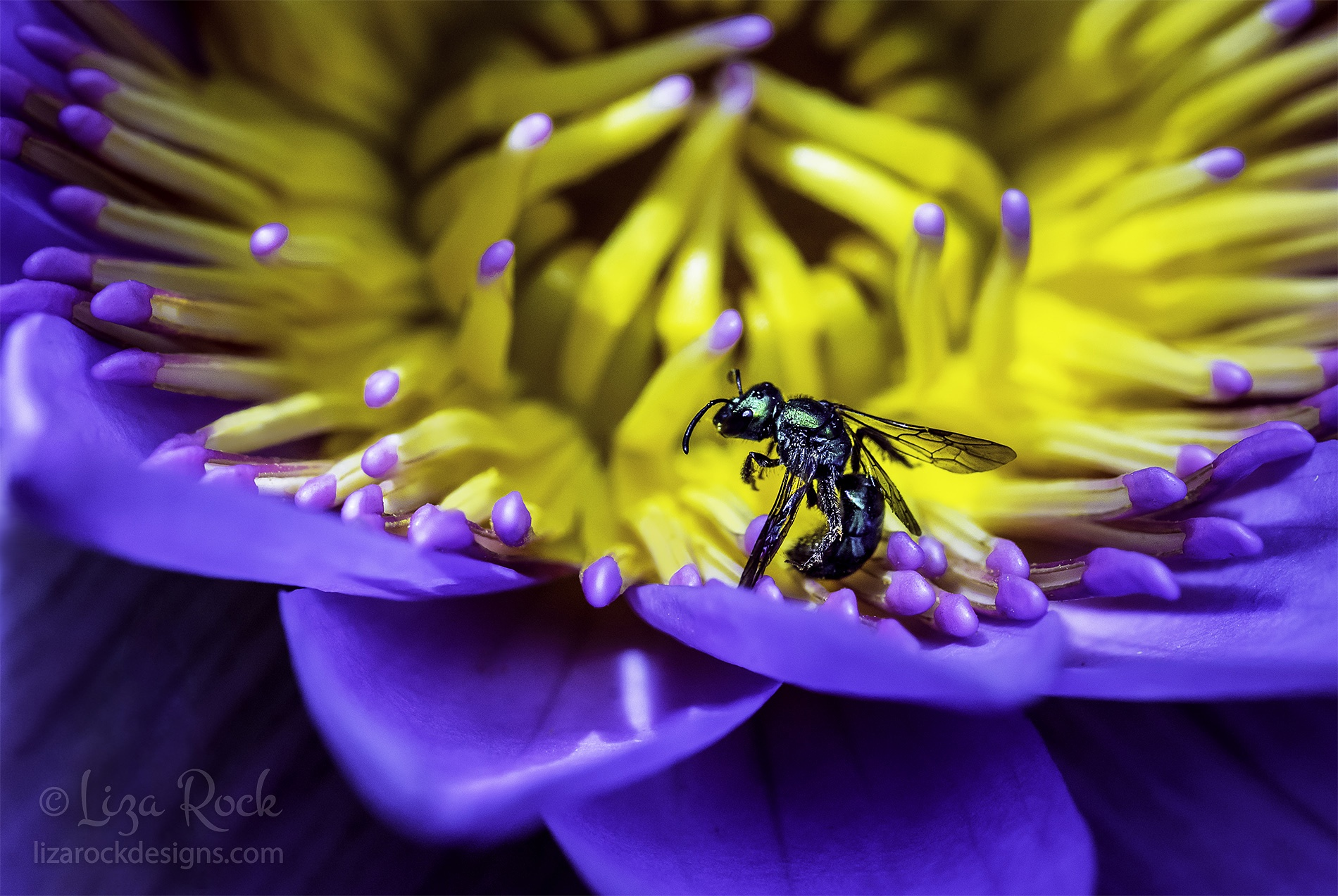 Intoxicated by Beauty by LRock
