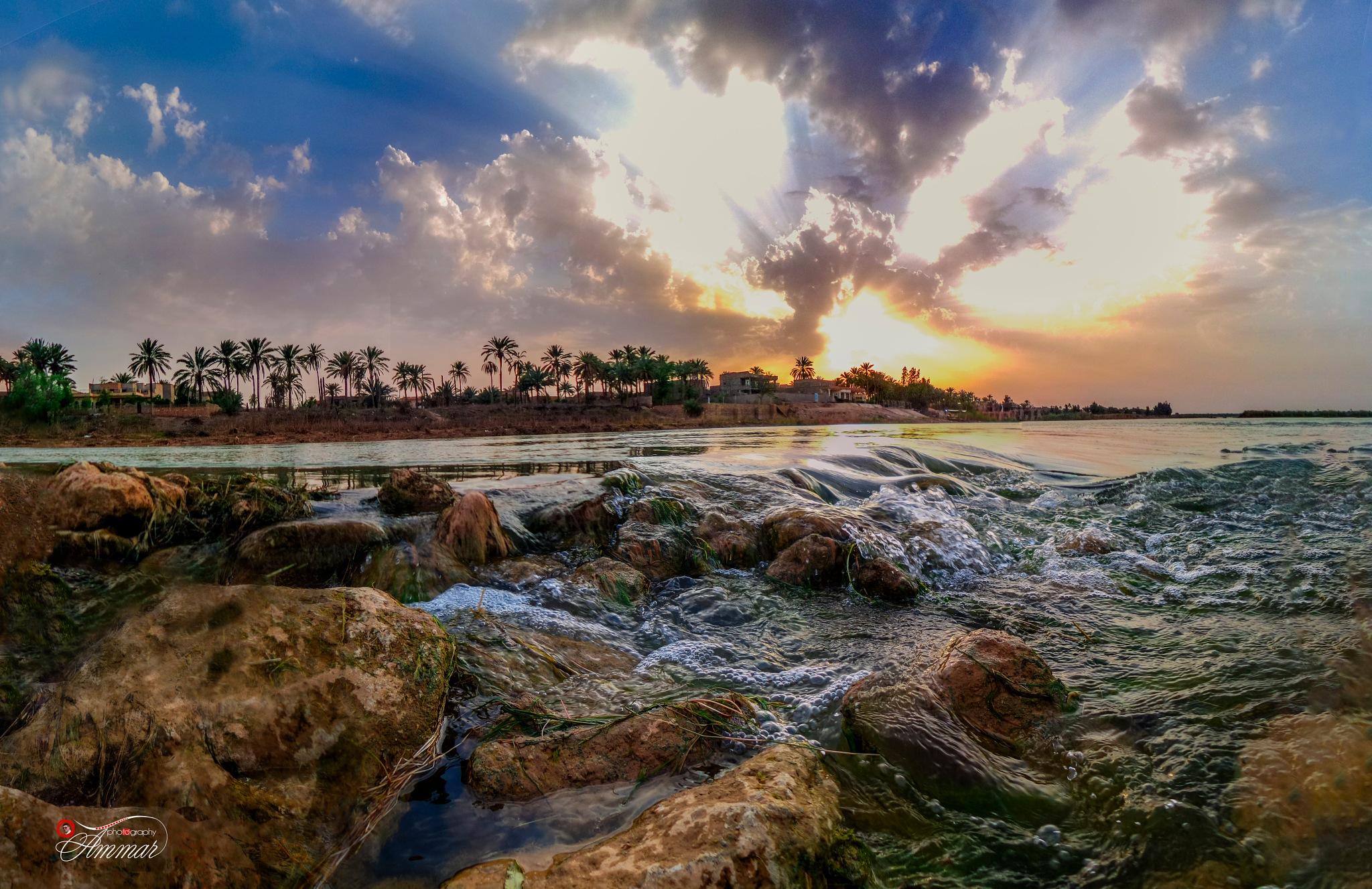 Morning Love by Ammar SH Heety