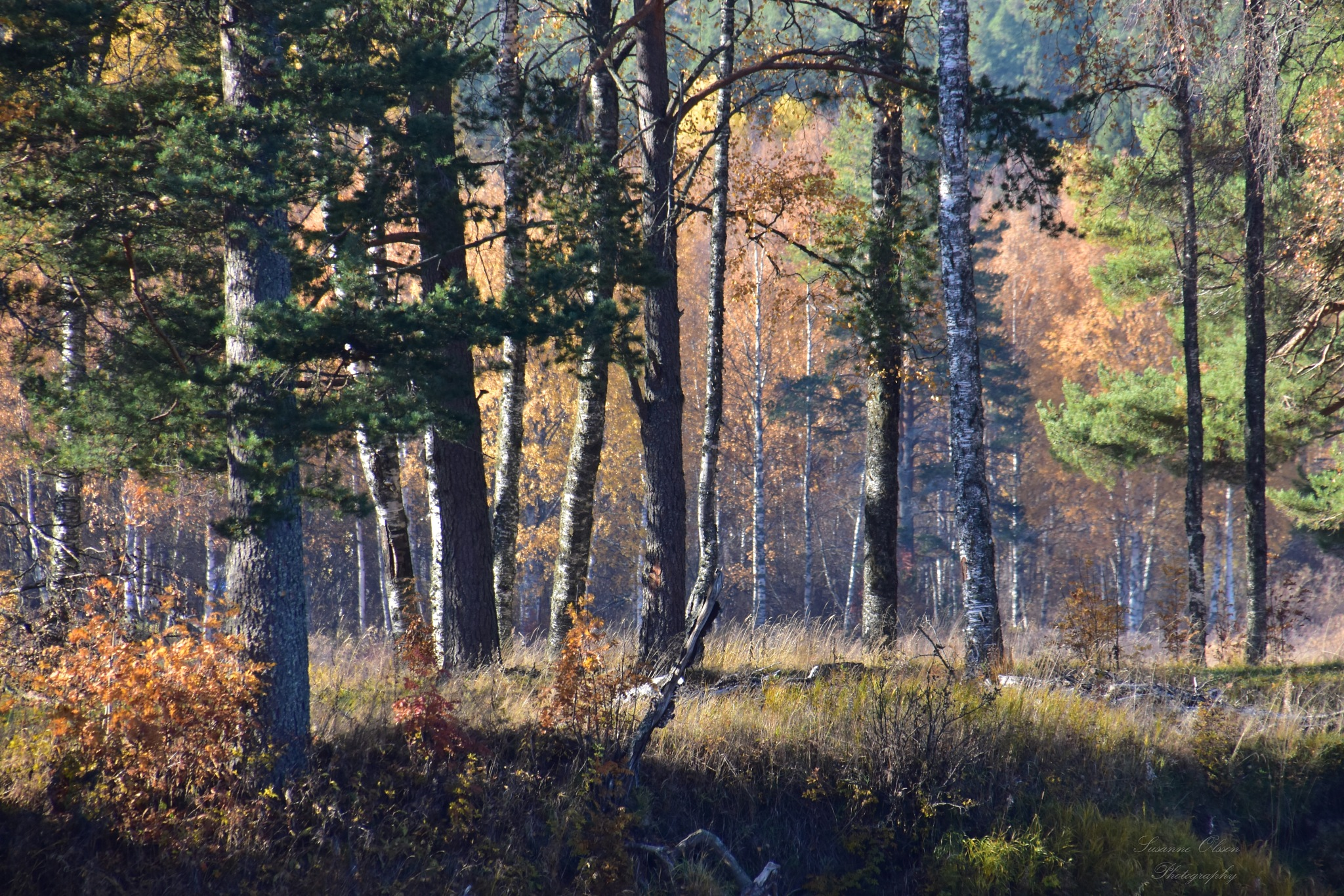 Hösttavla III by Susanne Olsson