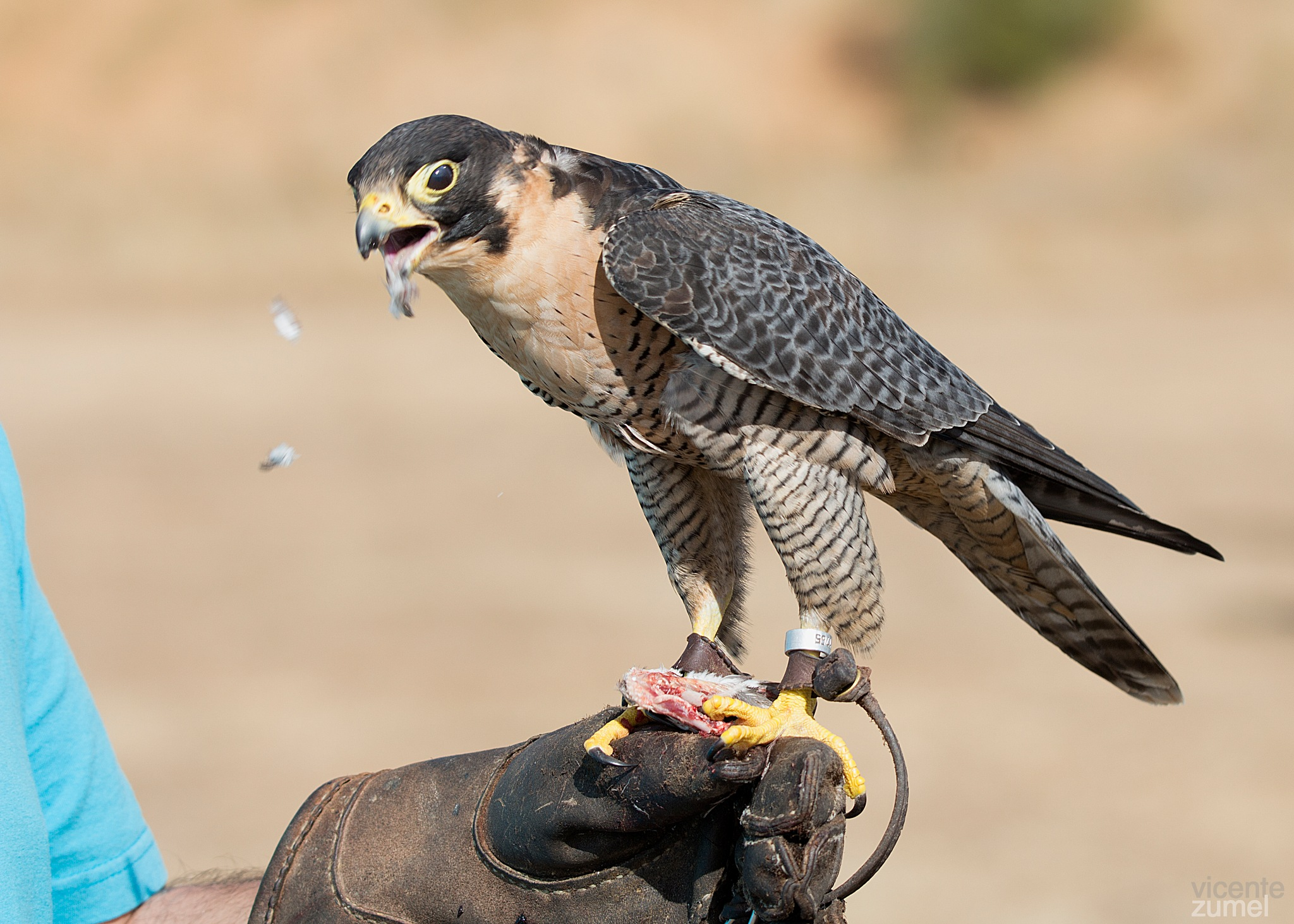 Falconry by Ernenek