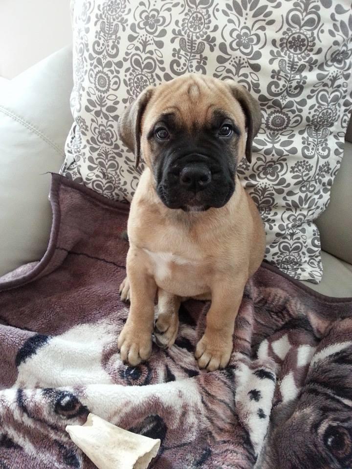 Kiaha as a puppy by Trevor Smith
