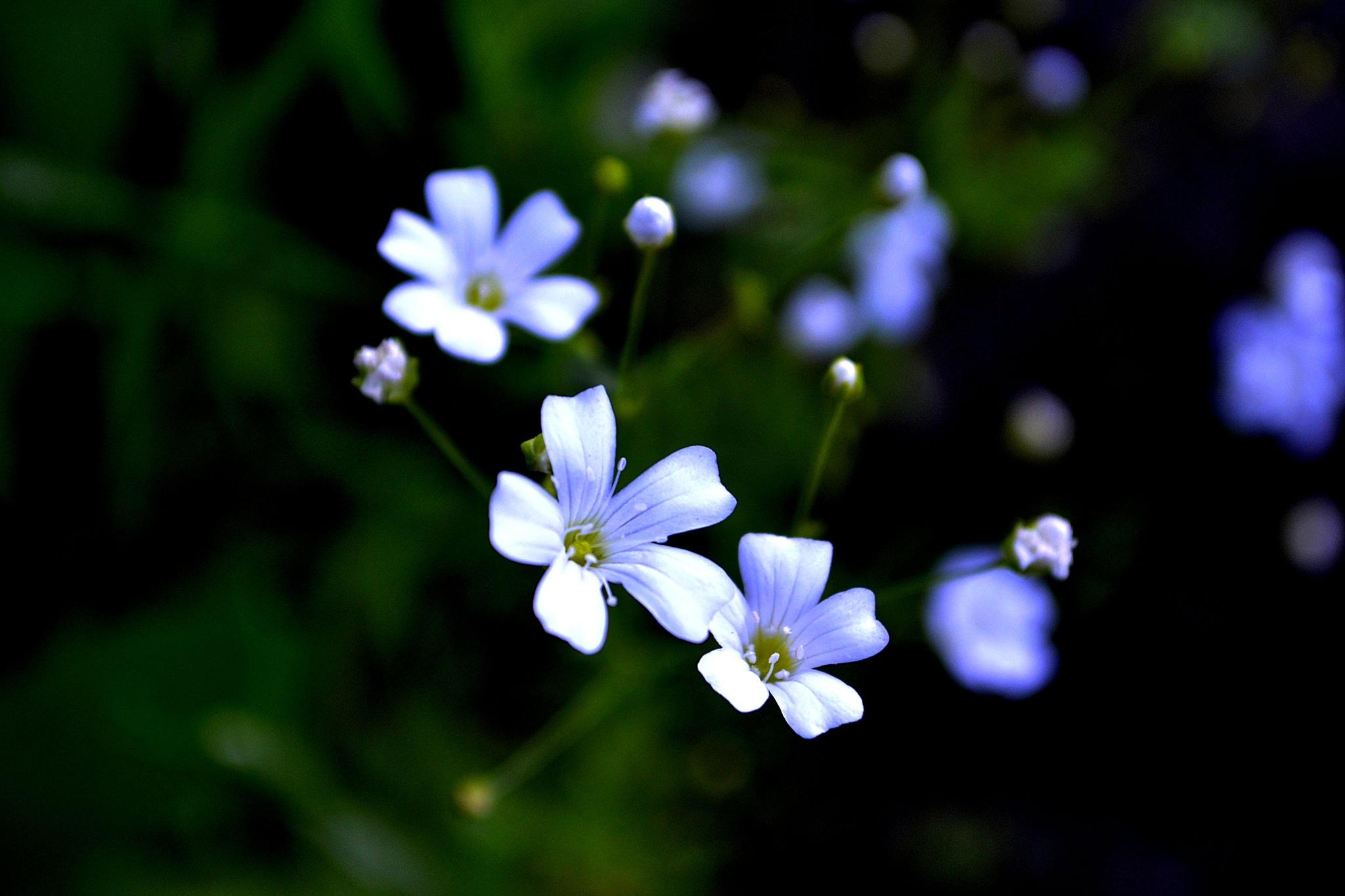 Happy Flowers by Trevor Smith