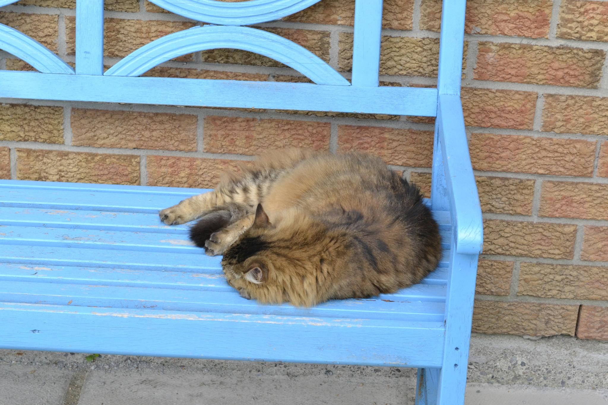 cat nap by Trevor Smith
