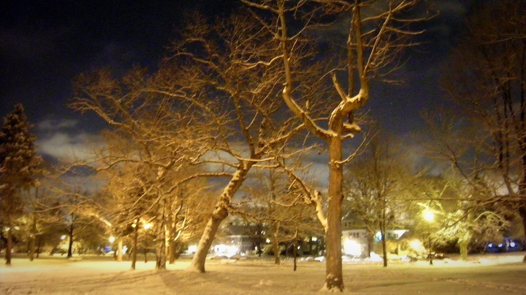 Elm Park Worcester Massachusetts by Miguelvillega