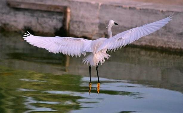 Bird by NaumanMughal