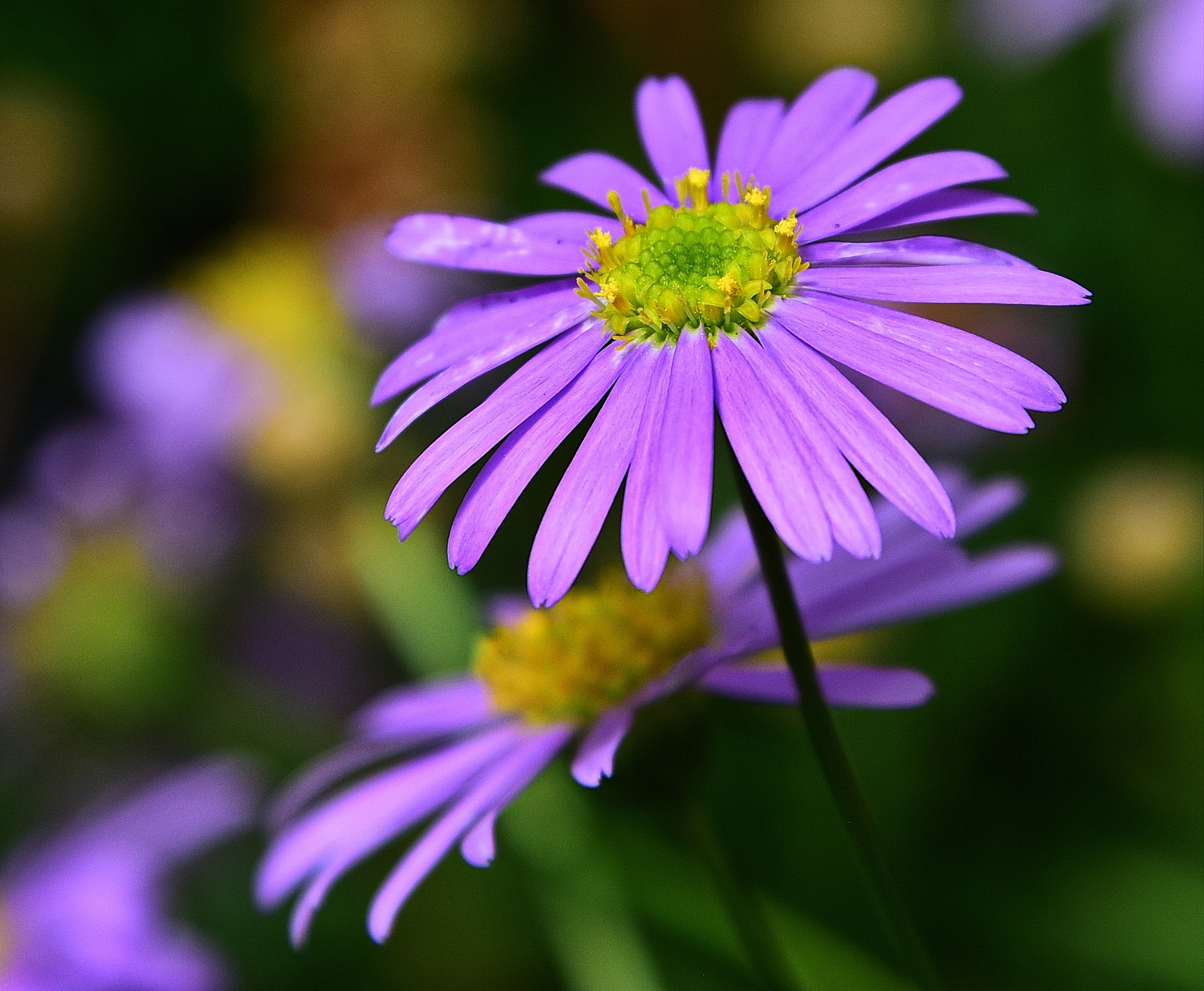 Flower by NaumanMughal