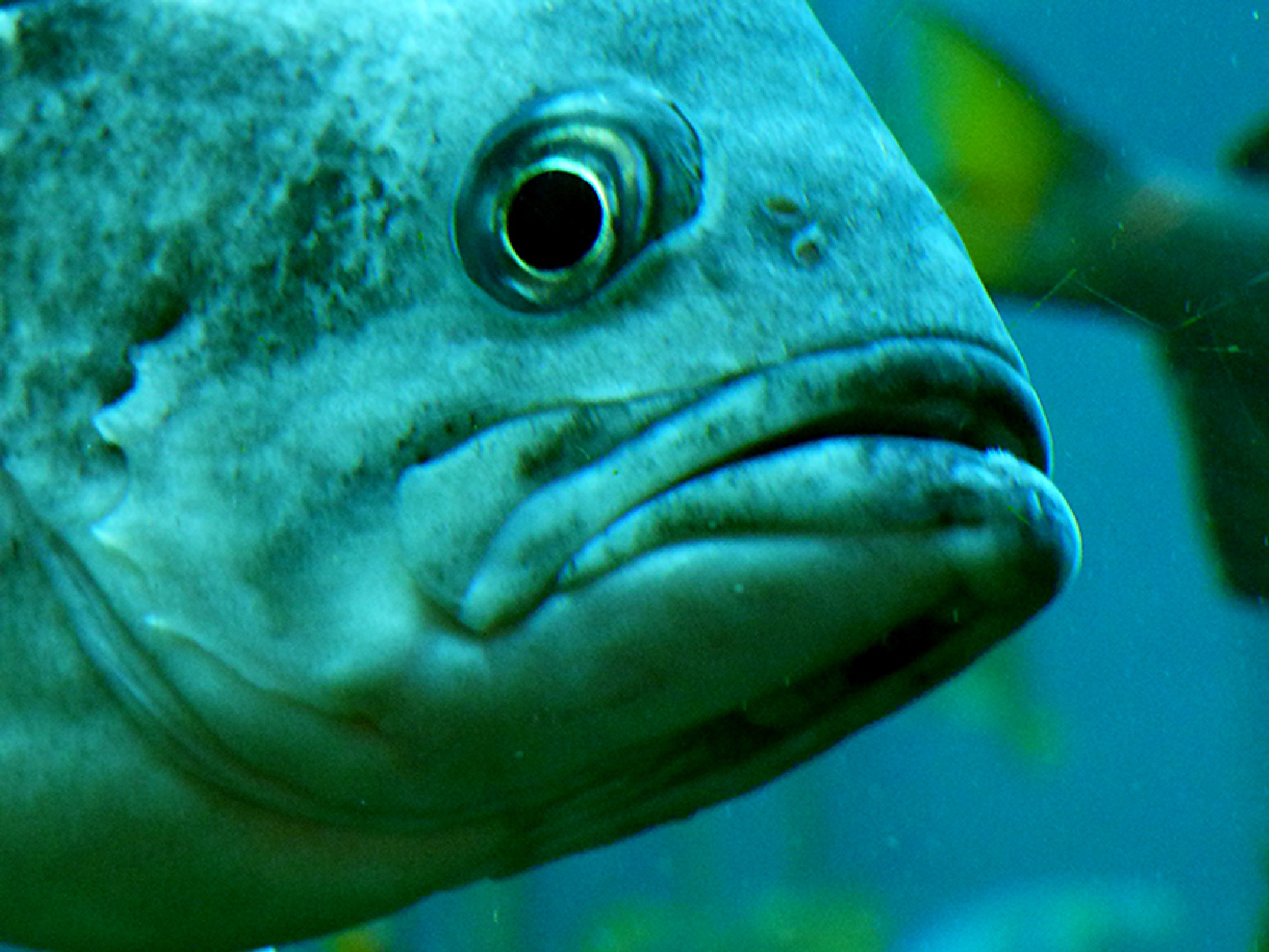 Fish eye by Sereniti1952