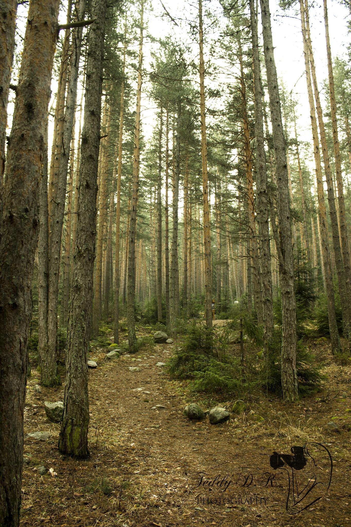 The magic forest by Teodora Simeonova