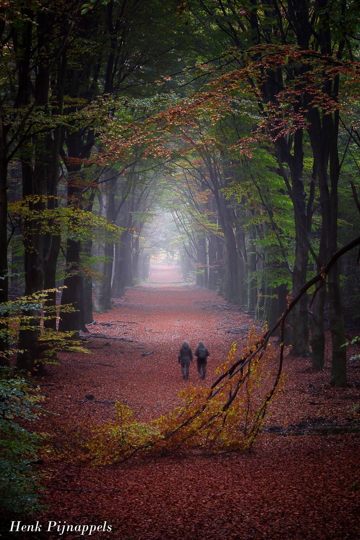 Beautiful seasons.. by Henk Pijnappels