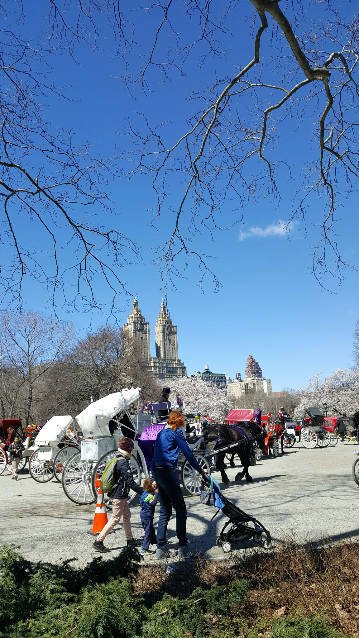 Central Park View  by Roselene Dolce