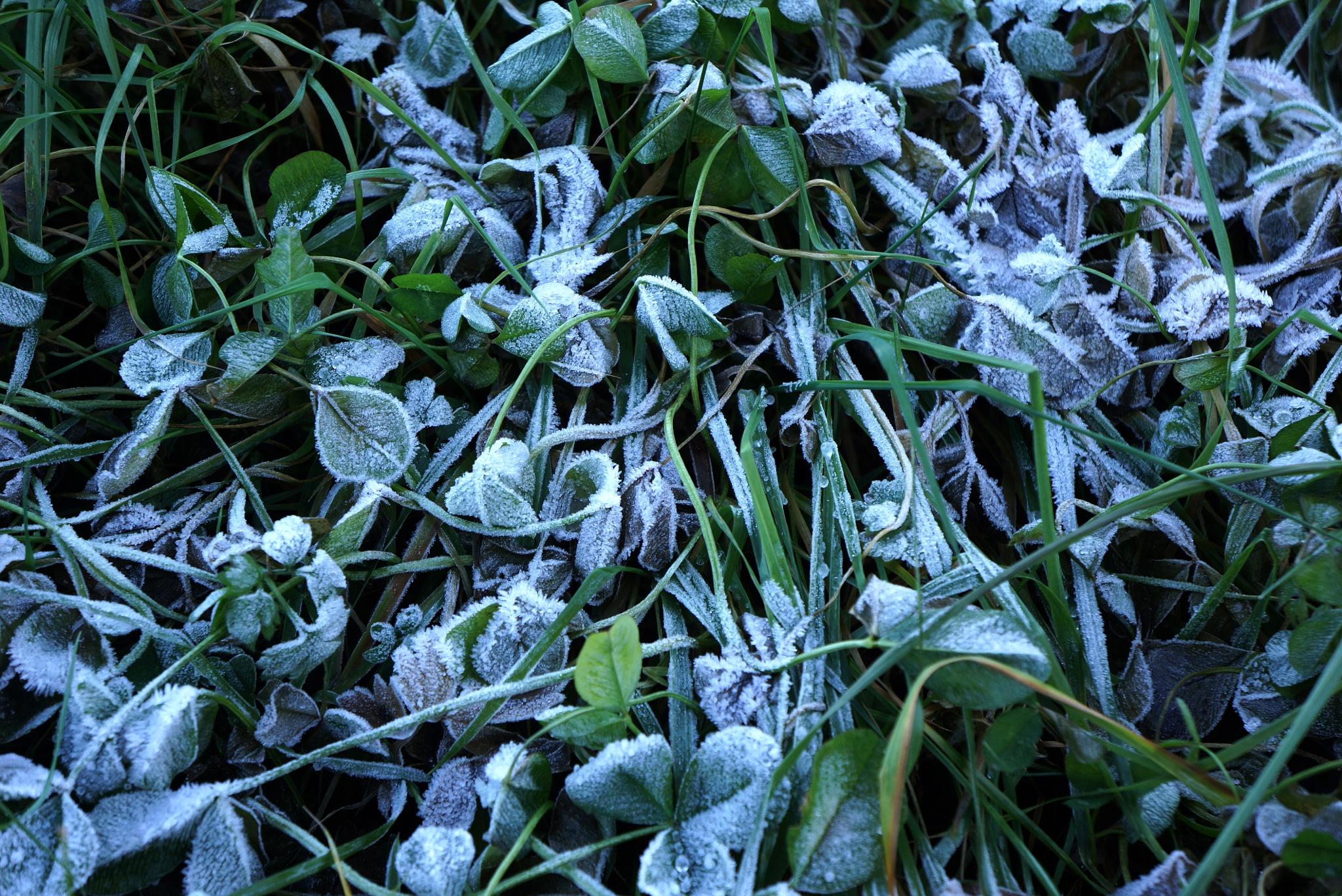 Frost by Burman