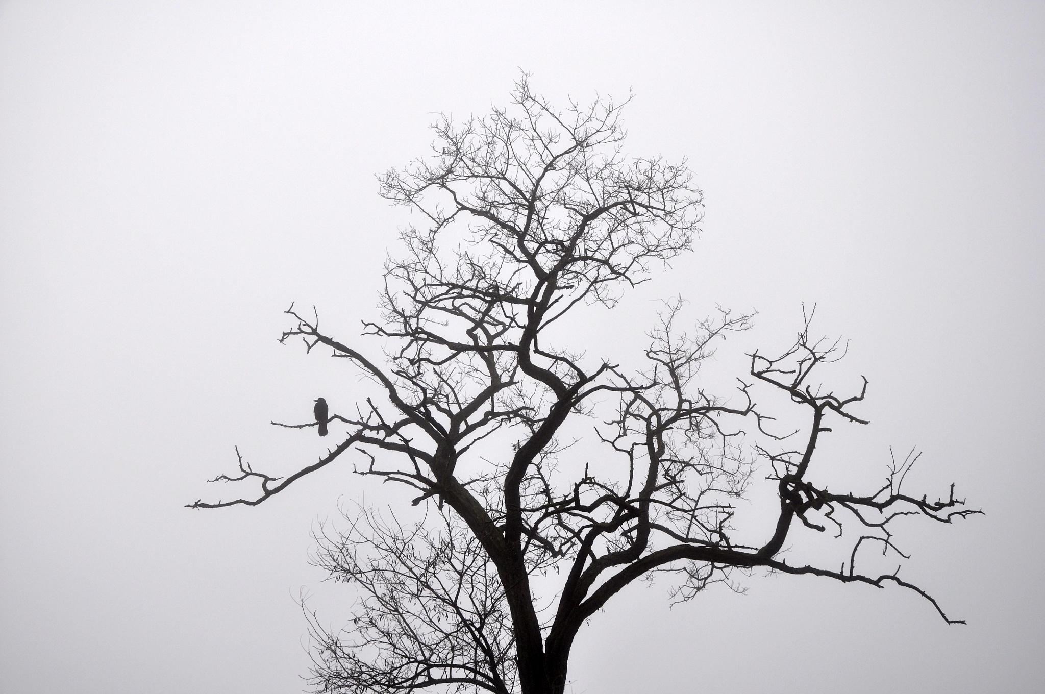 The Lonely Crow by Branislava Brandic