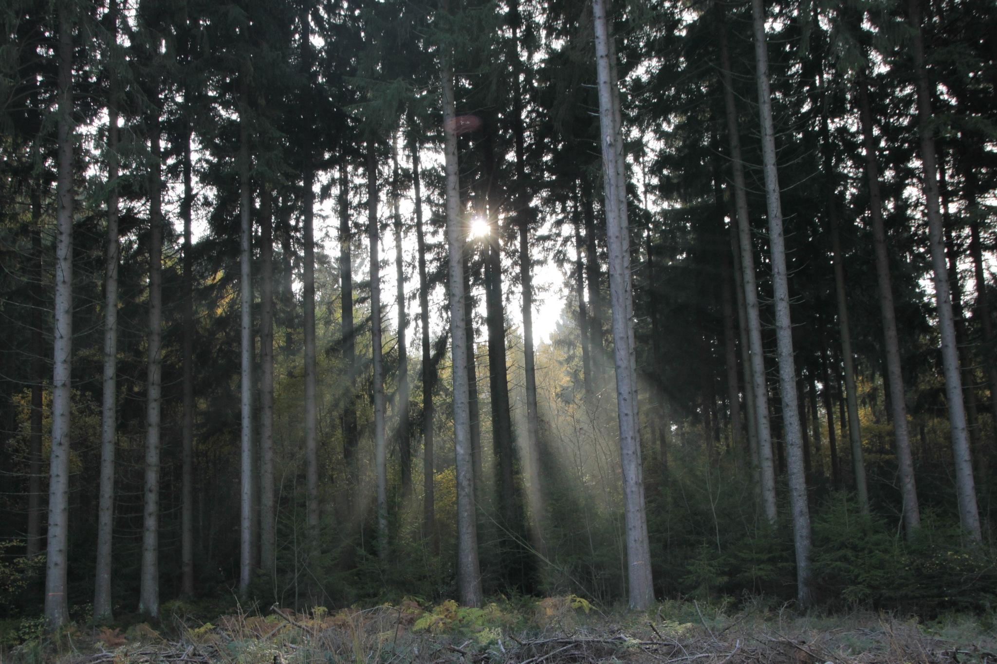 Sun Trees by Linus De Witte
