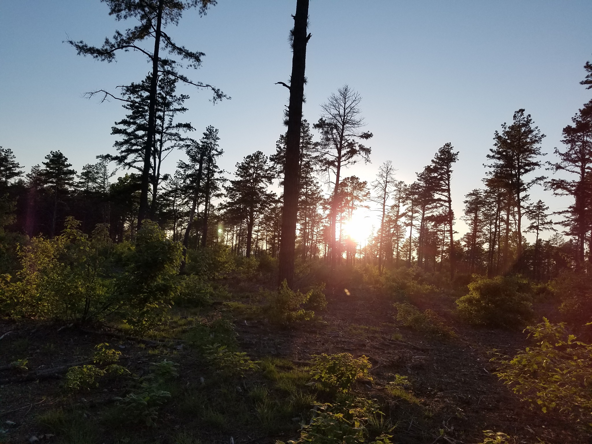 Sunset in the partially cleared forest  by David Korpiewski