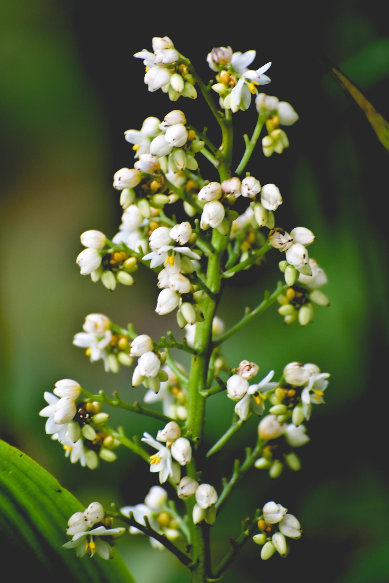 Flowers by nalaka526