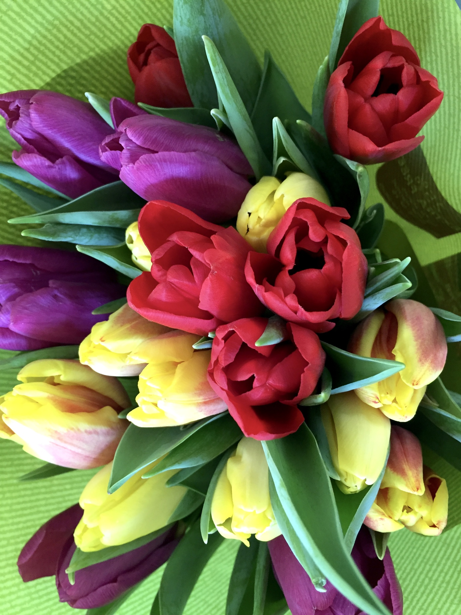Tulips by Marisa