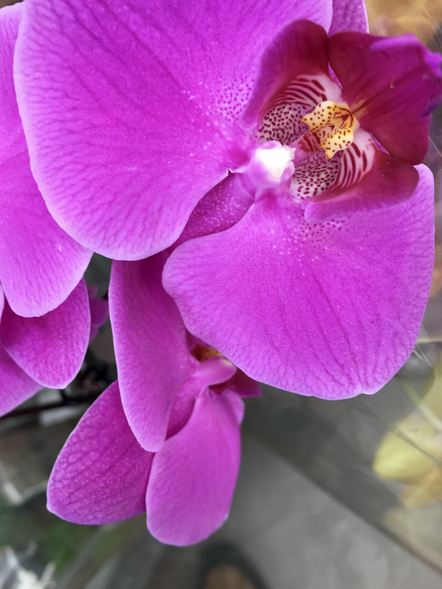 Orchid by Marisa
