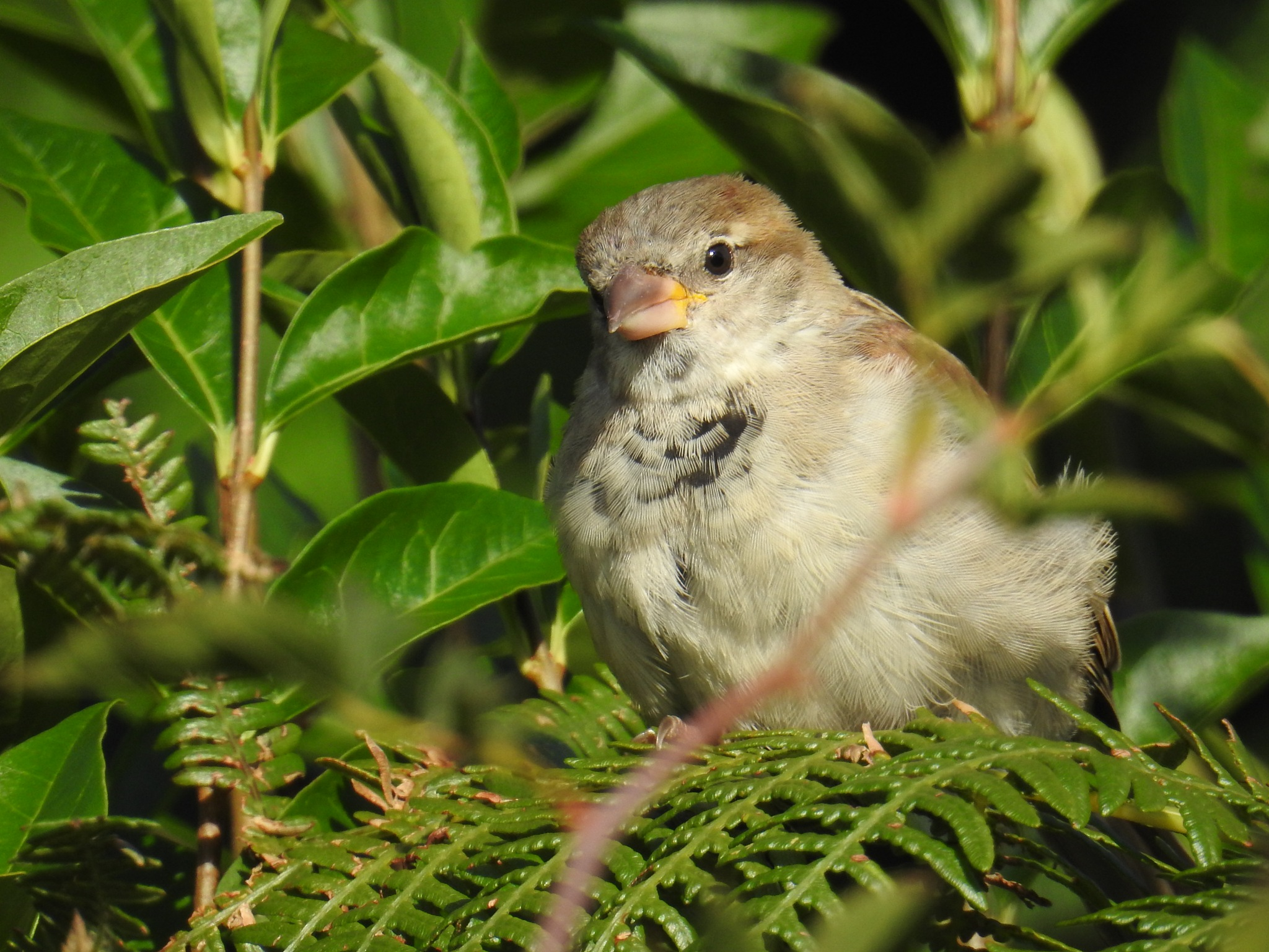 A lovely Sparrow... by Marisa