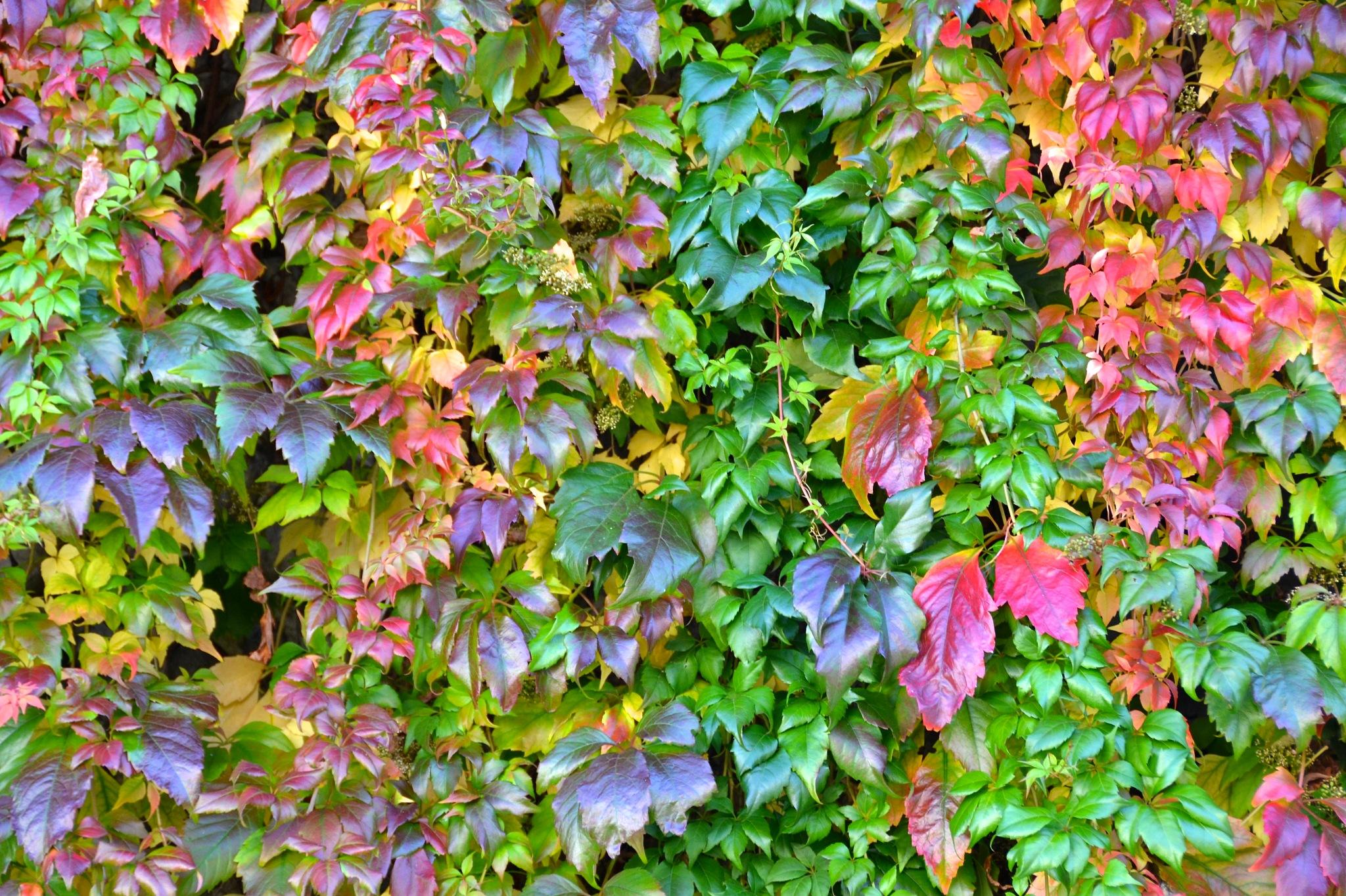 Autumn hues by Marisa
