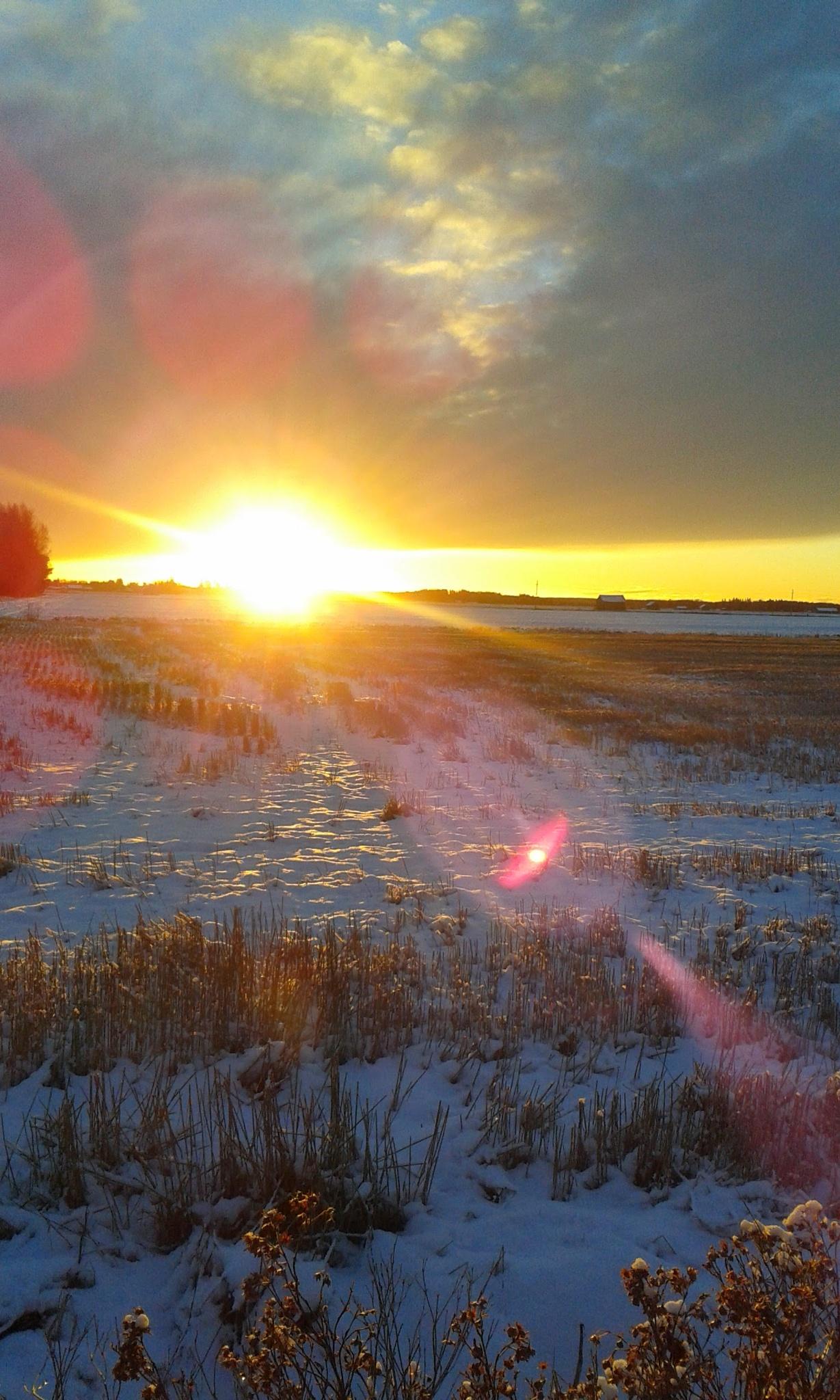 Auringon nousu by Pirkko Liisa Nikko